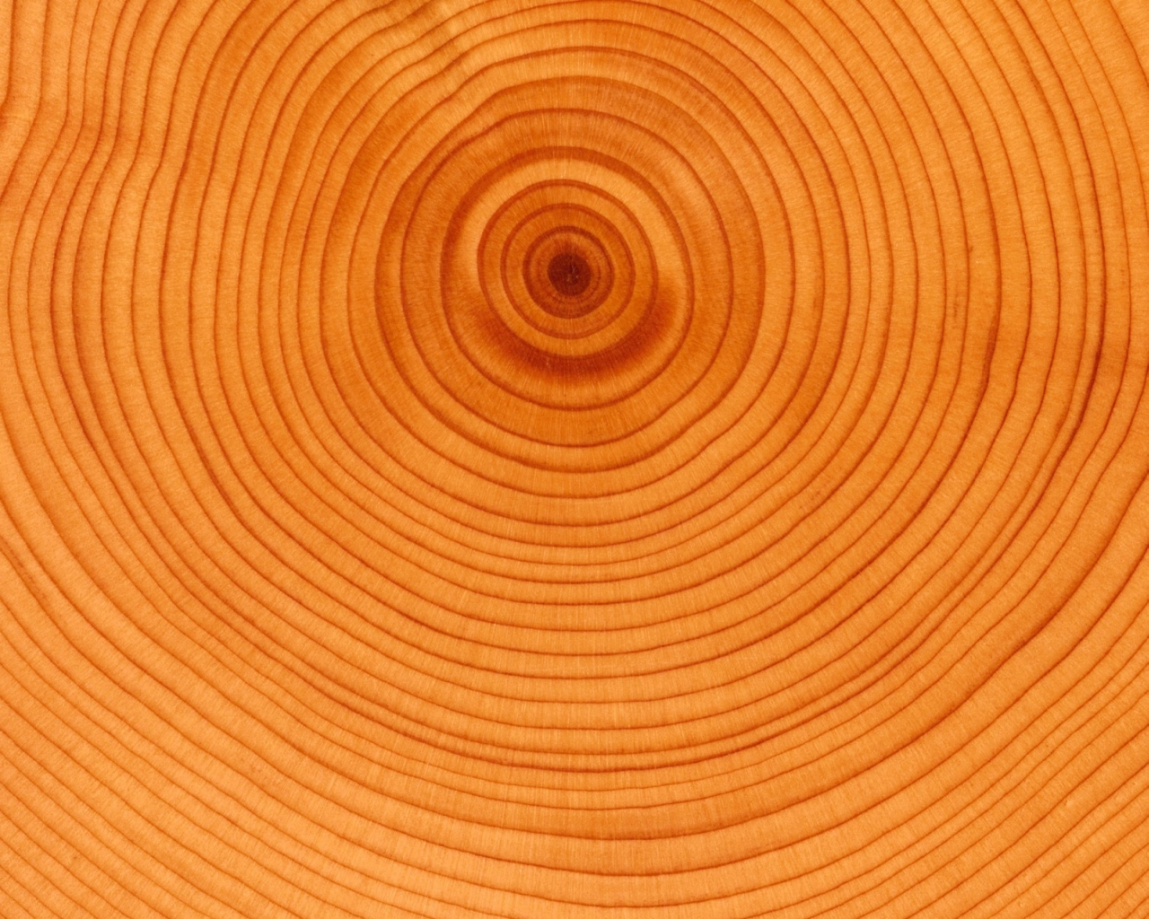Abstract pattern, tree rings