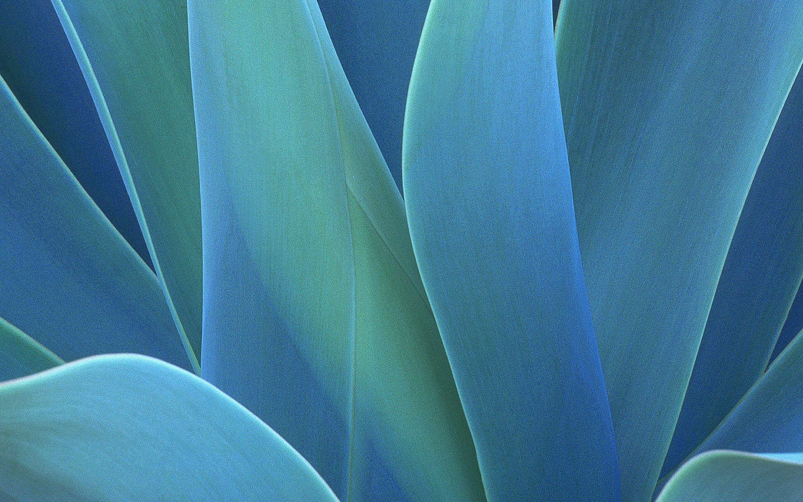 Abstraction from plants - Wallpaper for Mac OS X Tiger - High Definition