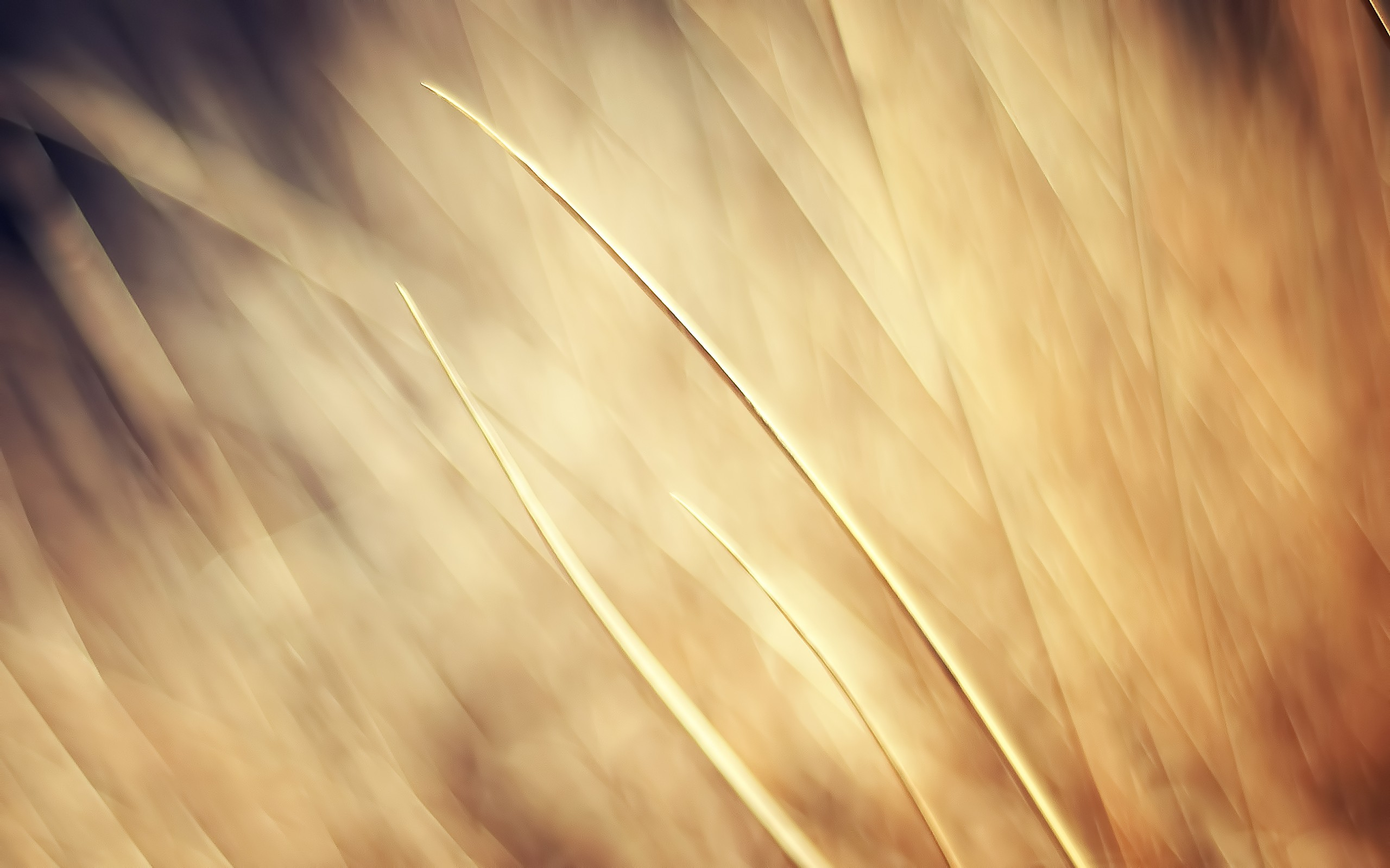 Download wallpaper beige abstraction on wheat field 2560x1600