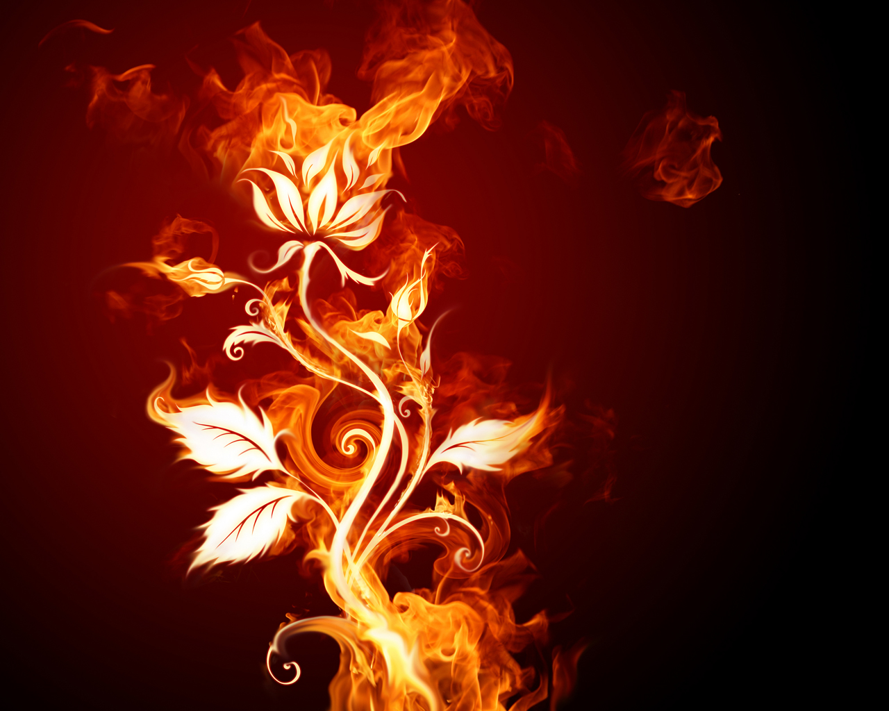 Silhouette of the flower of fire