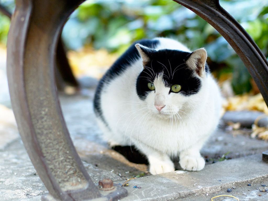Black and white cat with green eyes and a sly face, wallpaper, animals, cats.