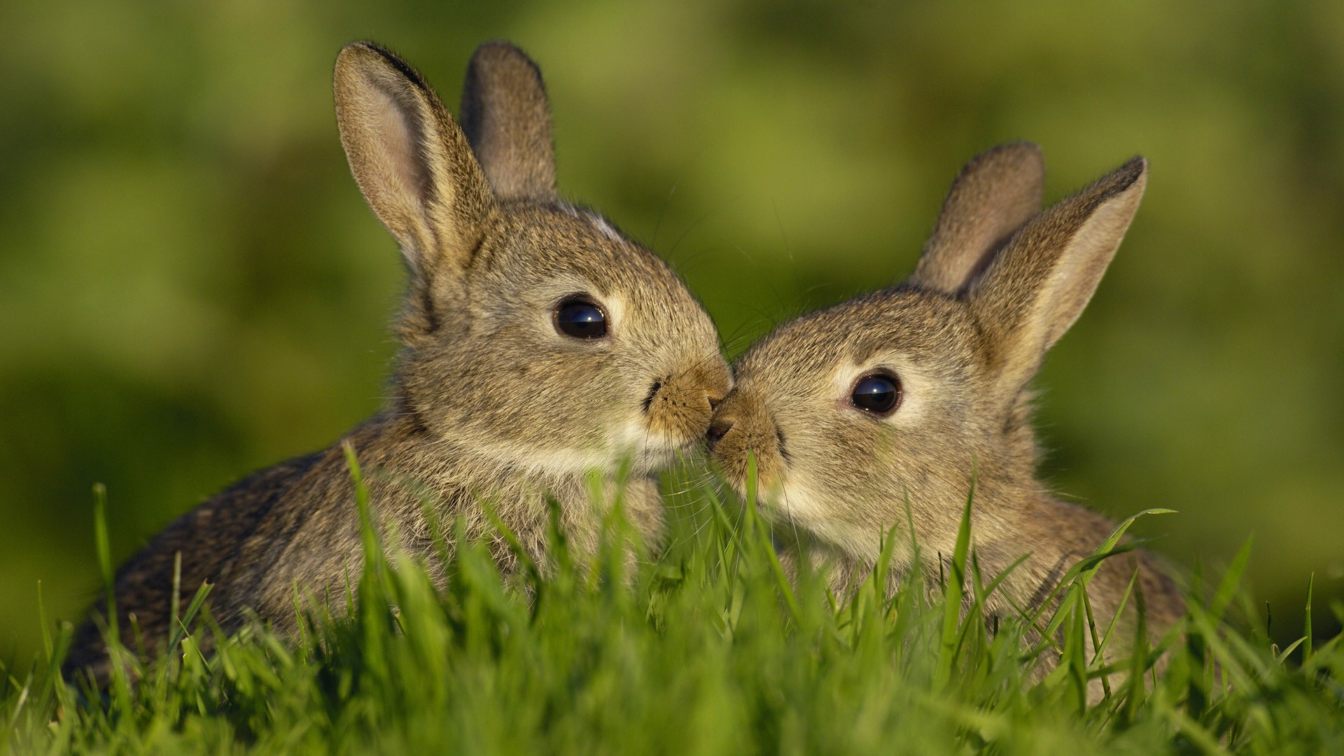 Brothers hares in the grass