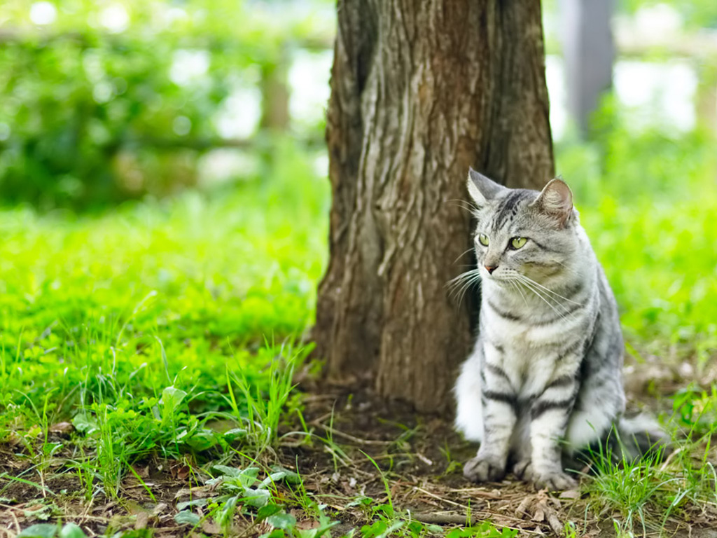 Cat in the grass under a tree, wallpaper, animals, cats.