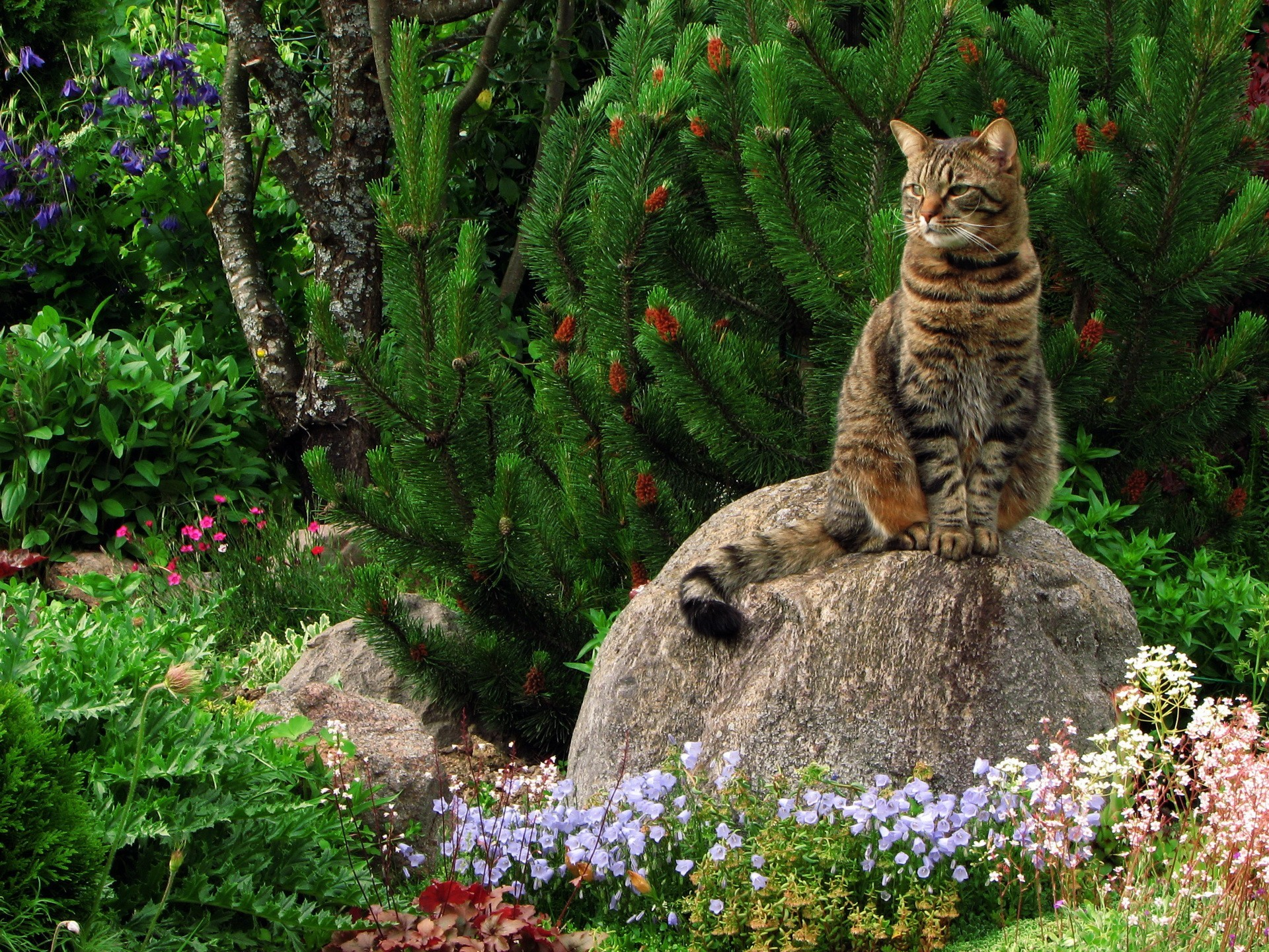 Cat on a stone