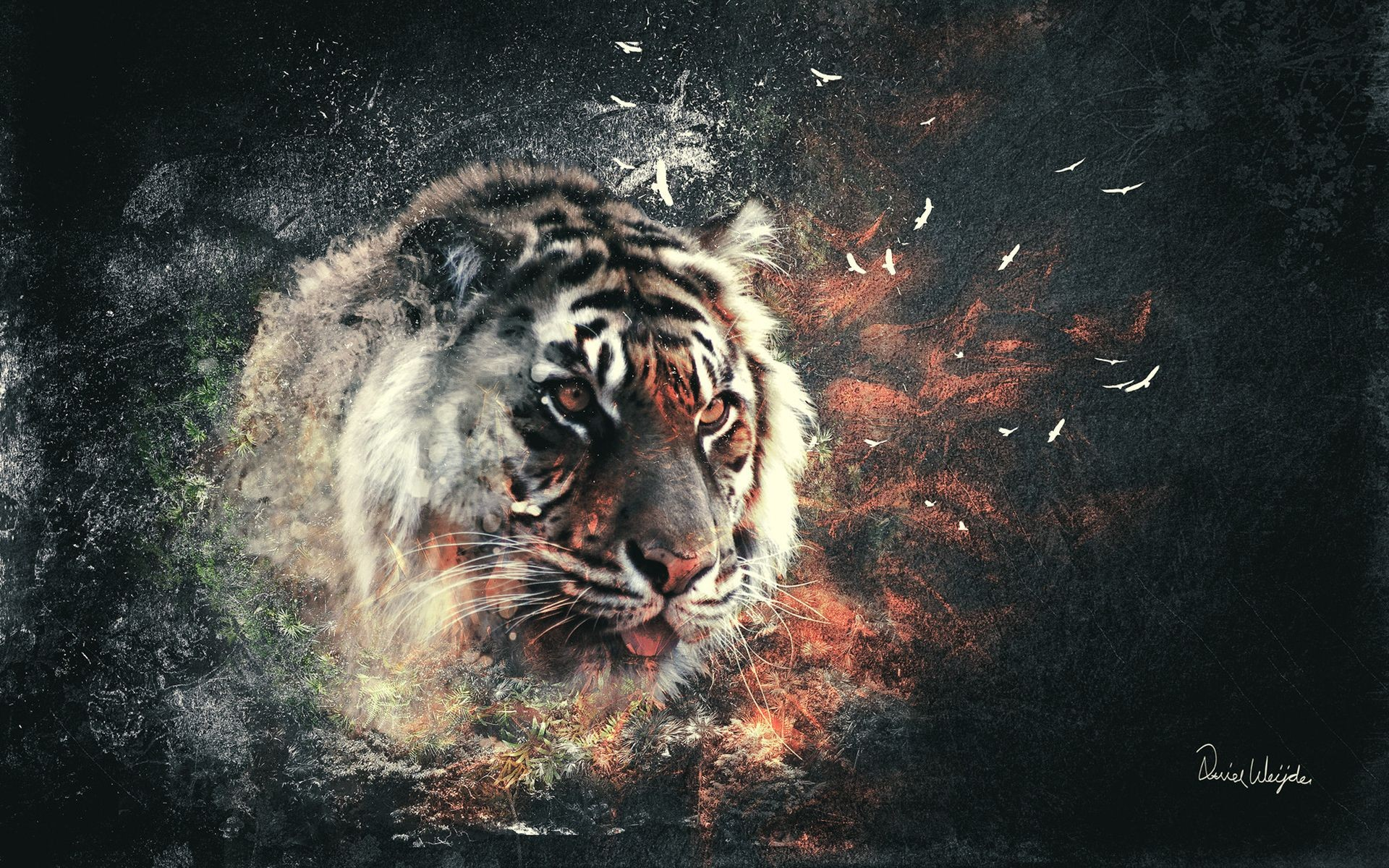 Collage with a tiger on your desktop.
