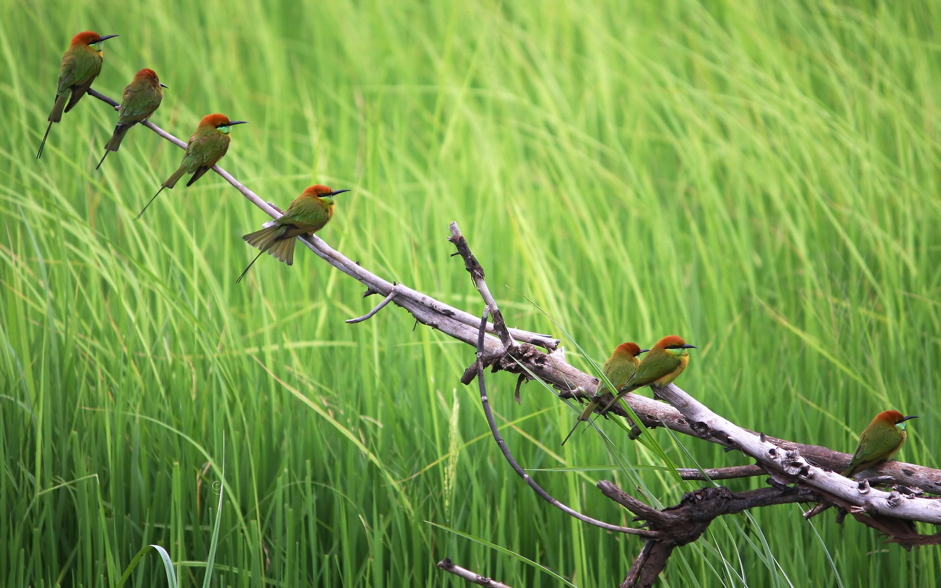 Colorful bird on an old snag in the grass, photo wallpaper