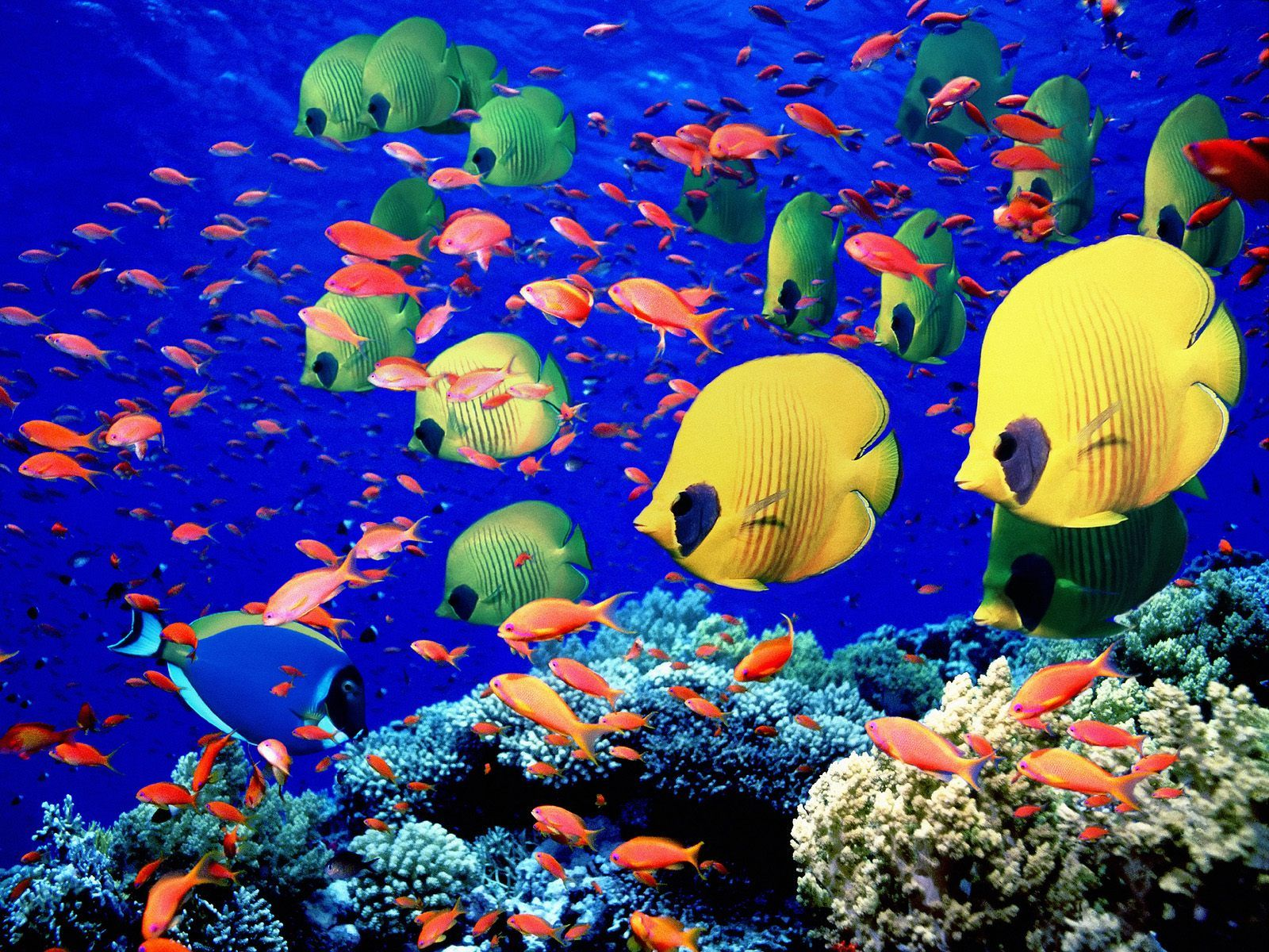 Colorful fish and underwater, wallpaper, animals