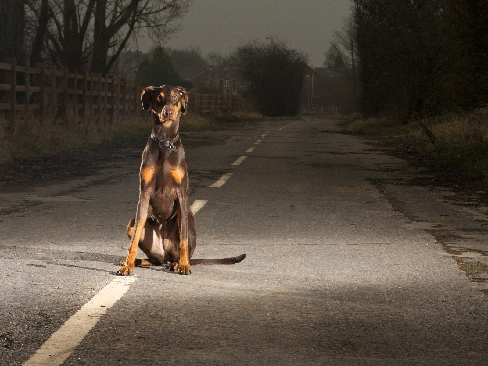 Dog on road