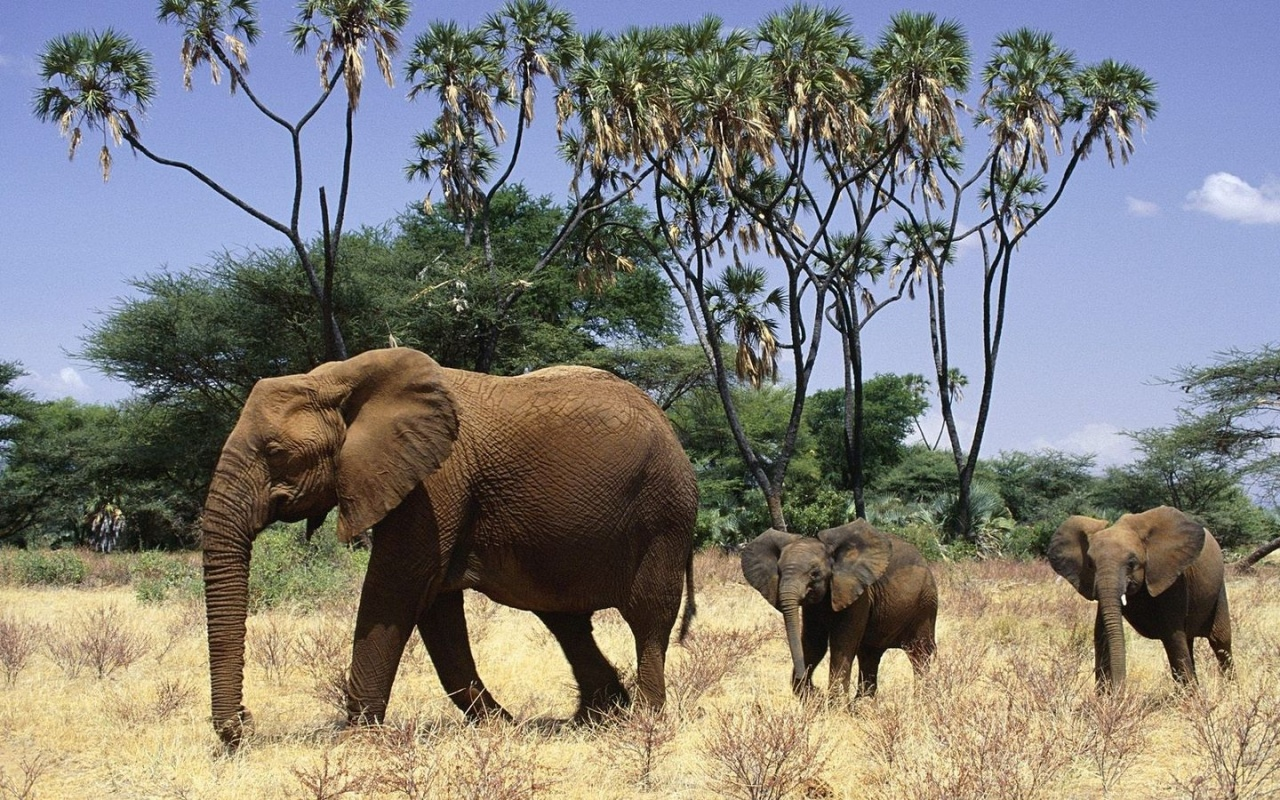 Elephant and elephant calves