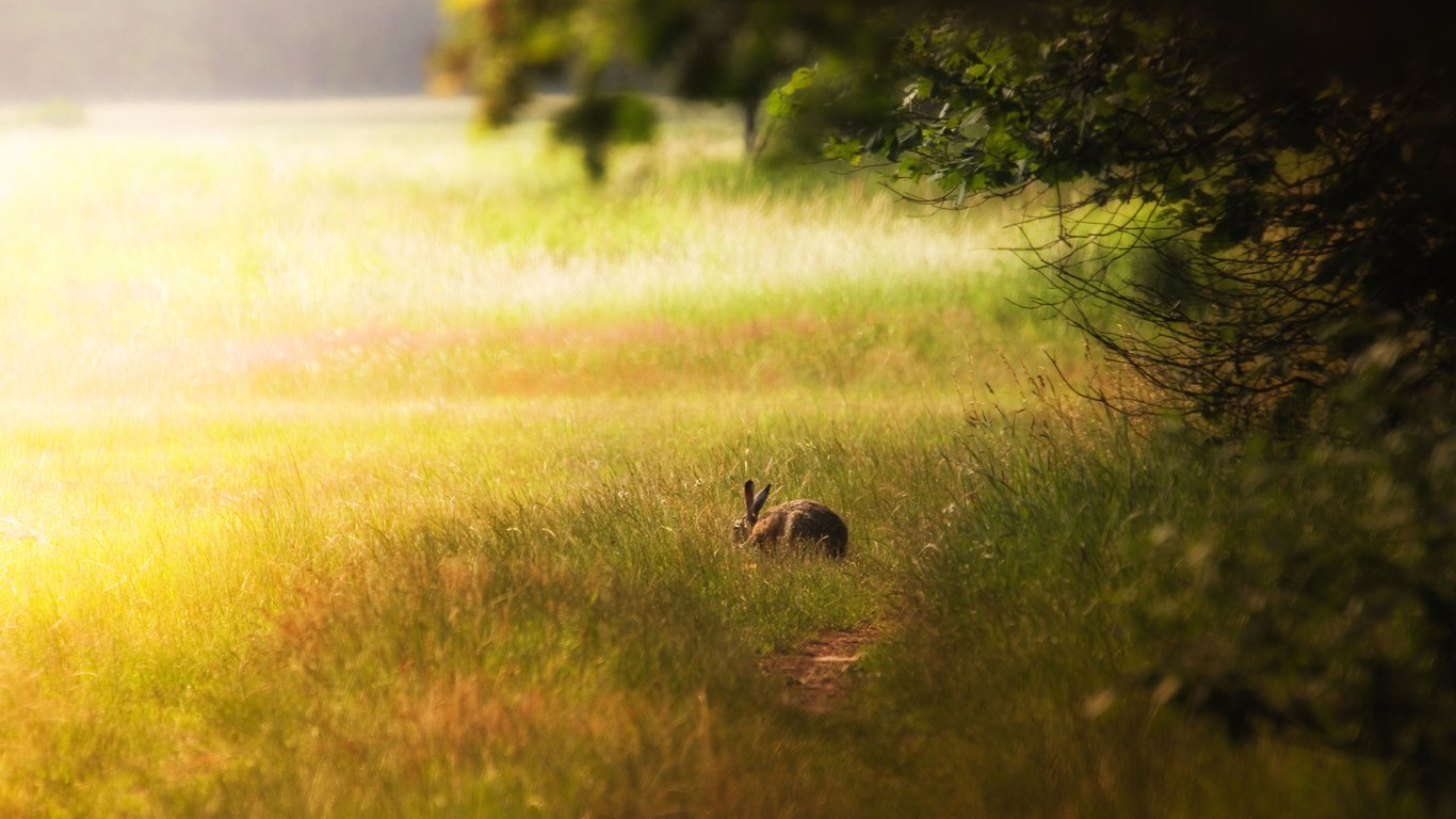 Green meadow and rabbit