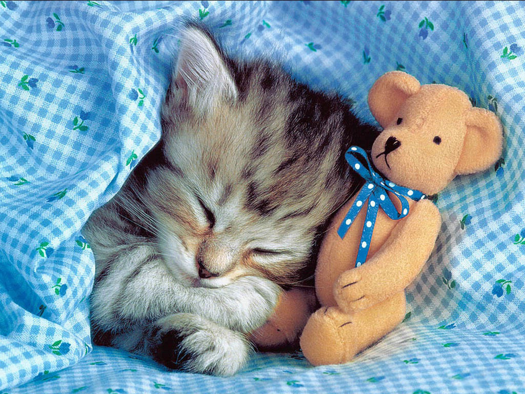 Kitten under a blanket with a teddy bear, wallpaper, animals, kittens.