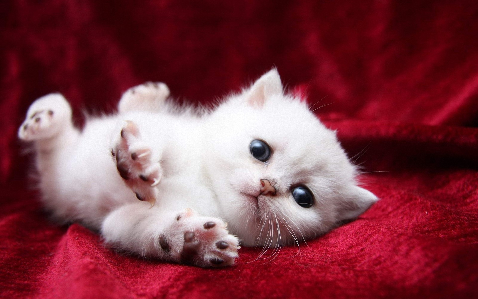 Little white fluffy kitten, photo wallpaper