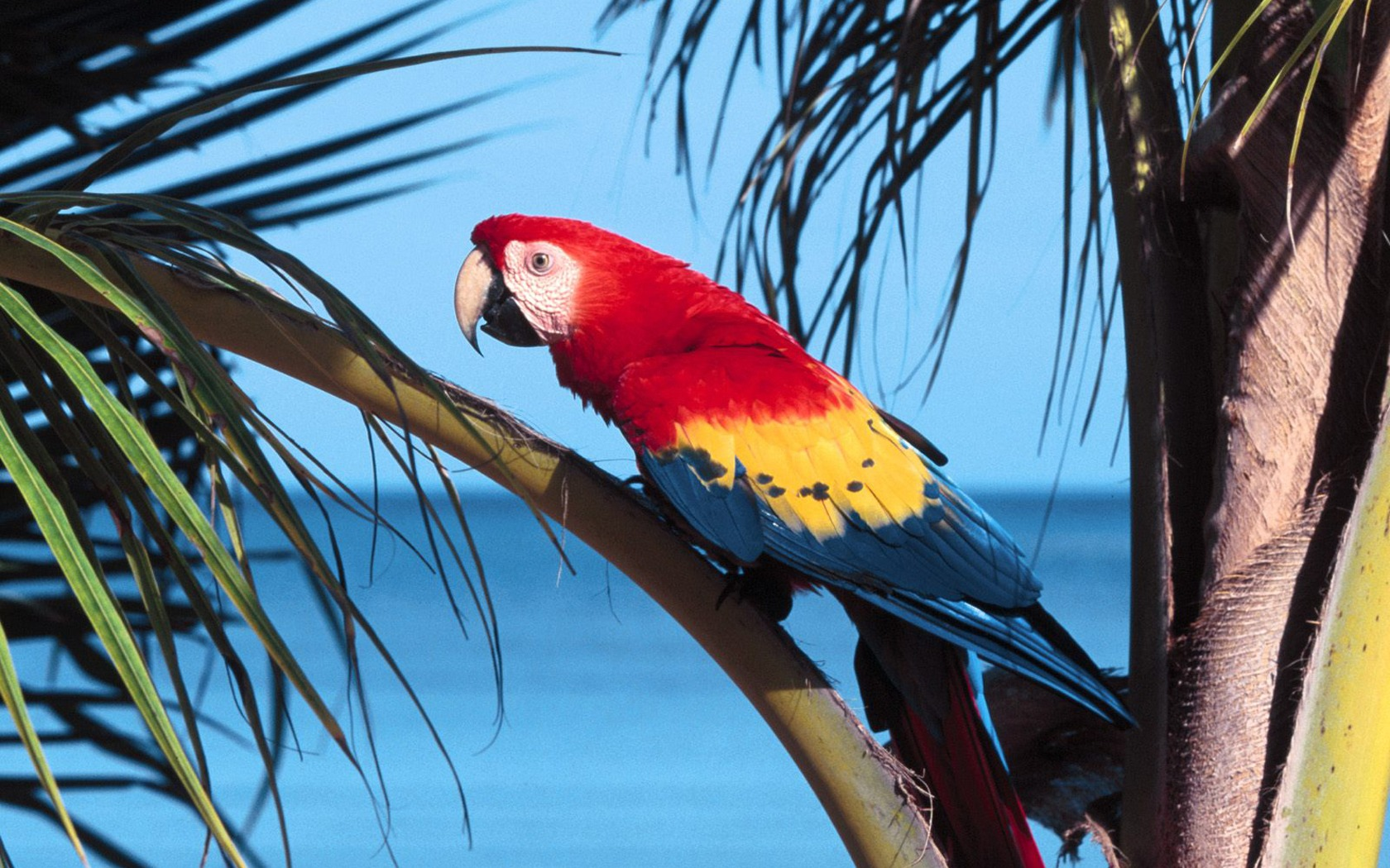Parrot on palm