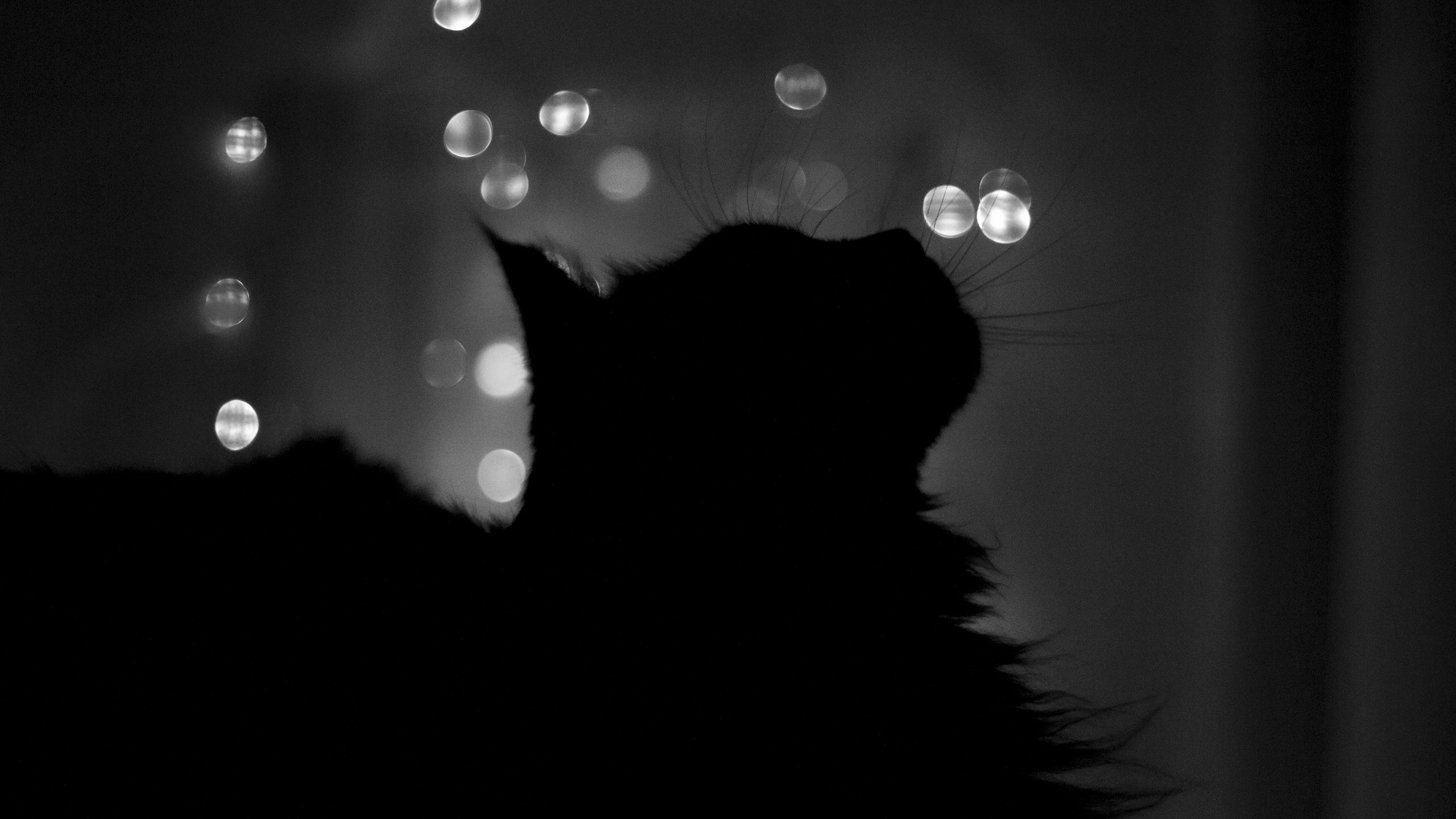 Silhouette of a cat in the dark, photo wallpaper high resolution.