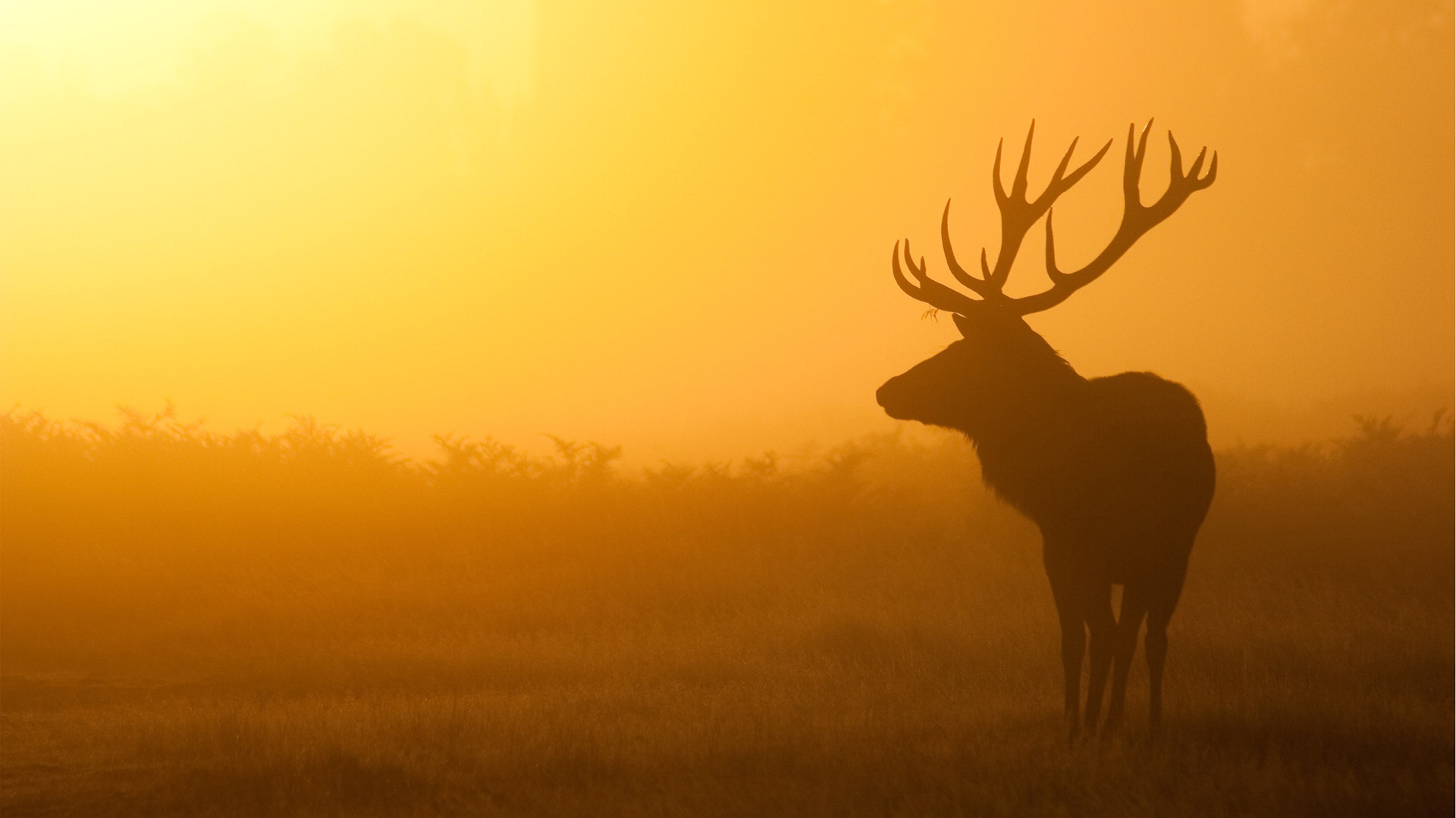 Silhouette of a deer in the fog at dawn