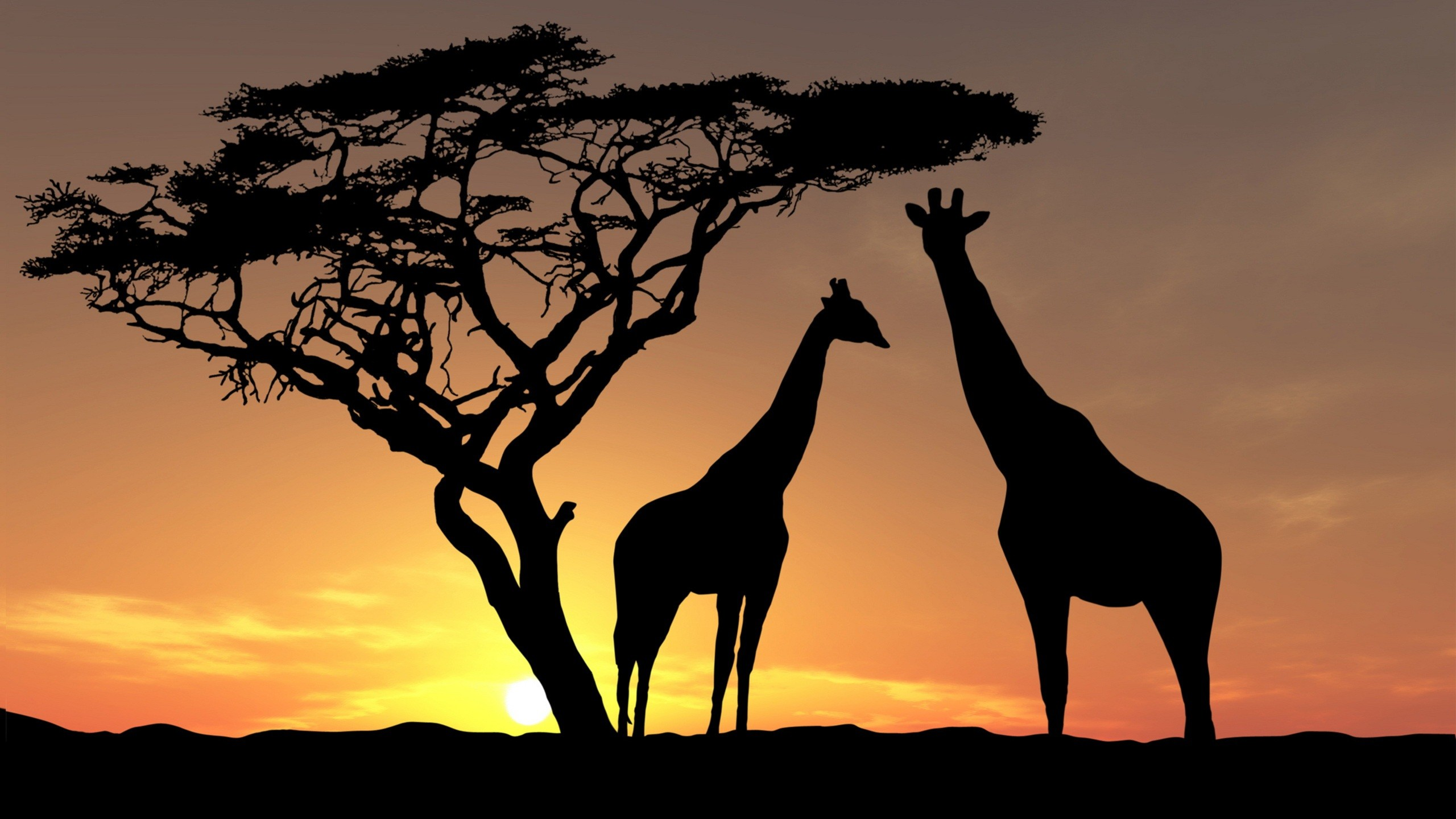 Silhouettes of giraffes and a tree at sunset