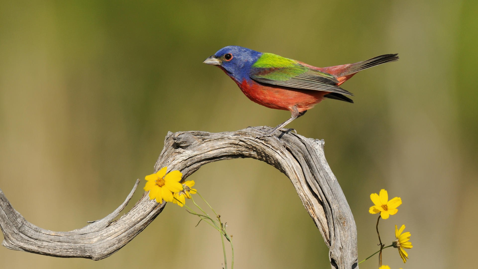 Very beautiful and colorful bird