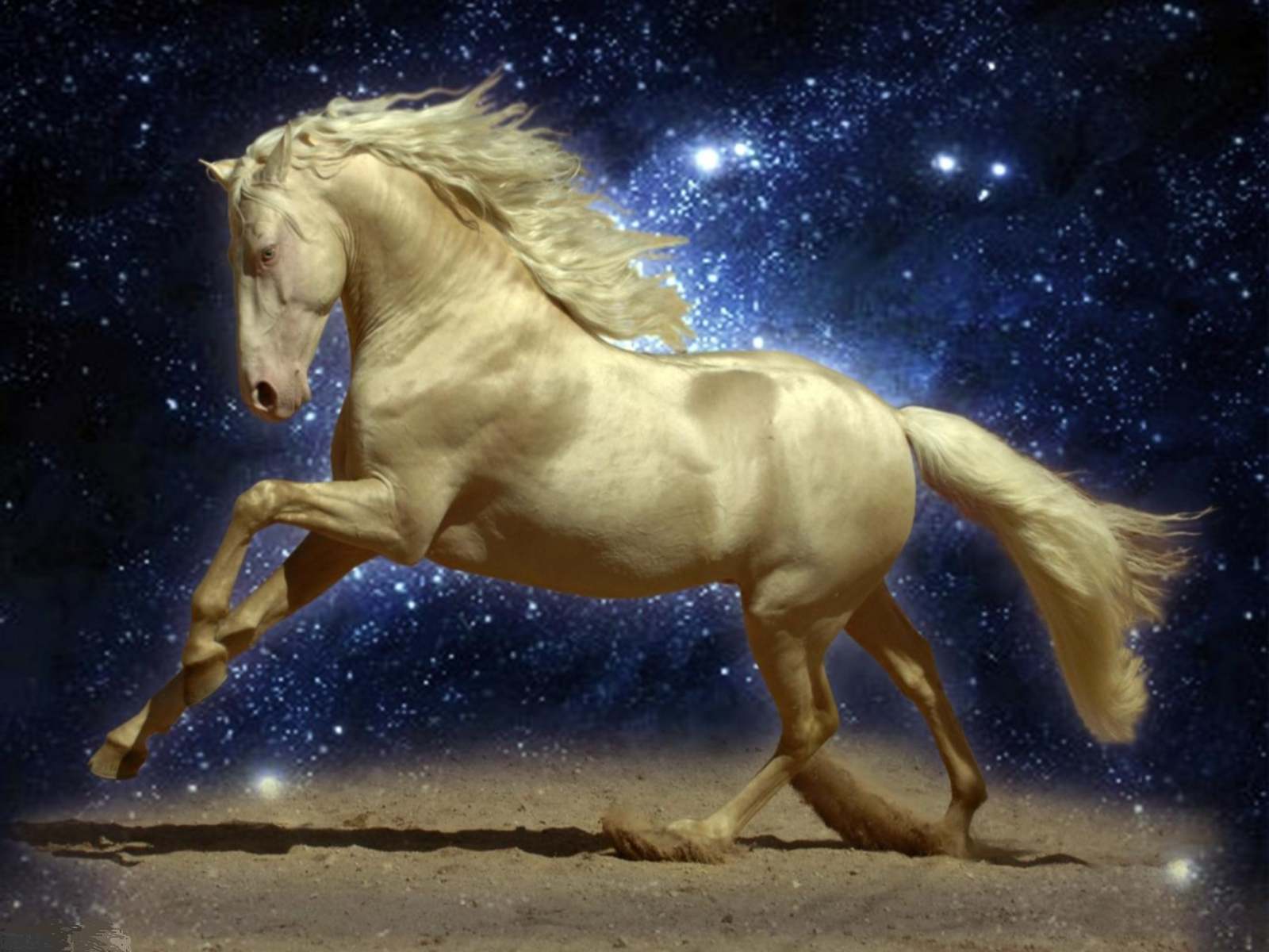 white horse on a background sky