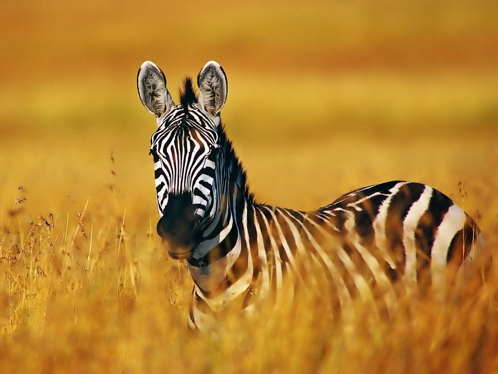 PHOTO OF GIRLS ZEBRA