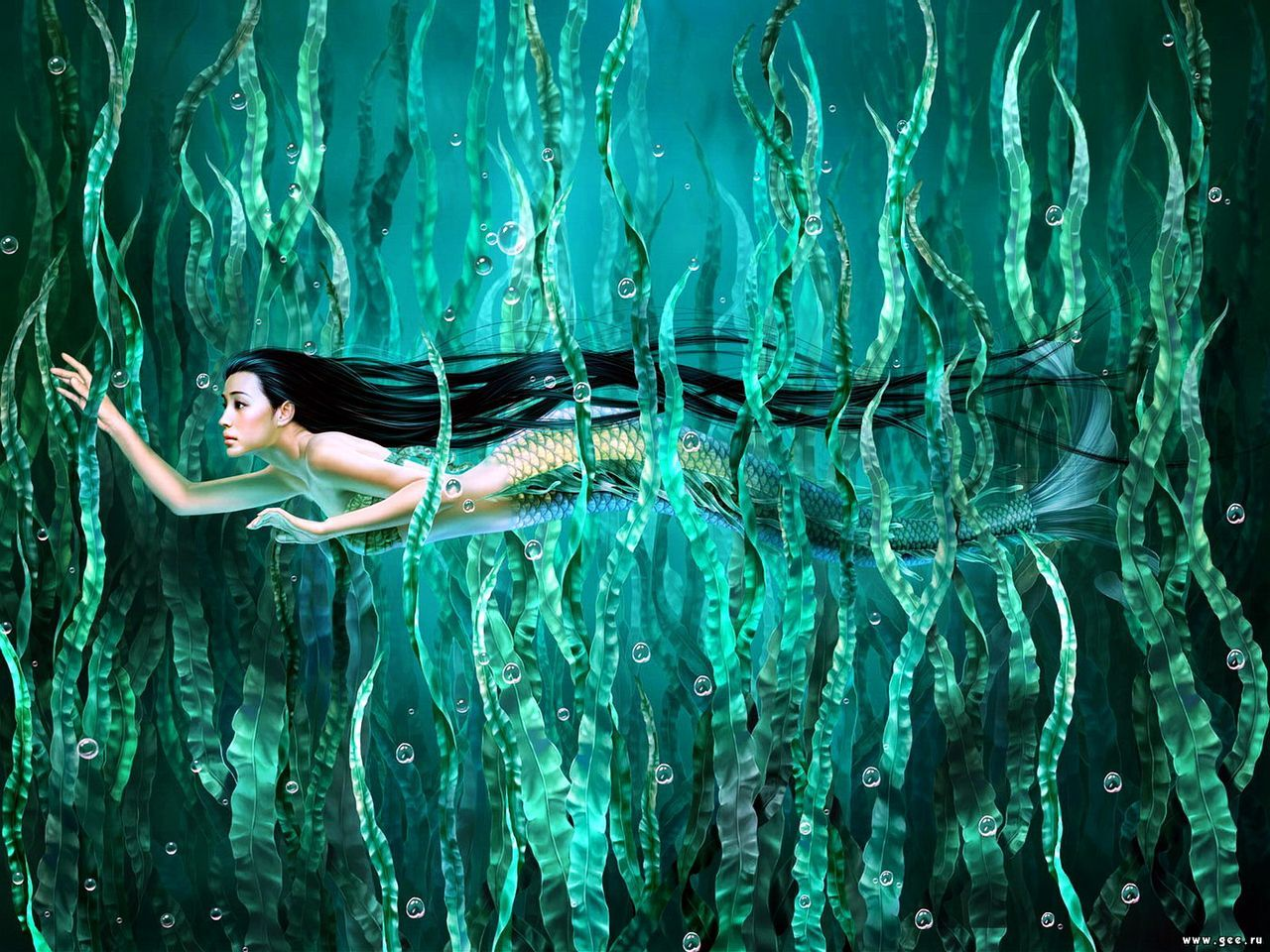 mermaid-and-algae