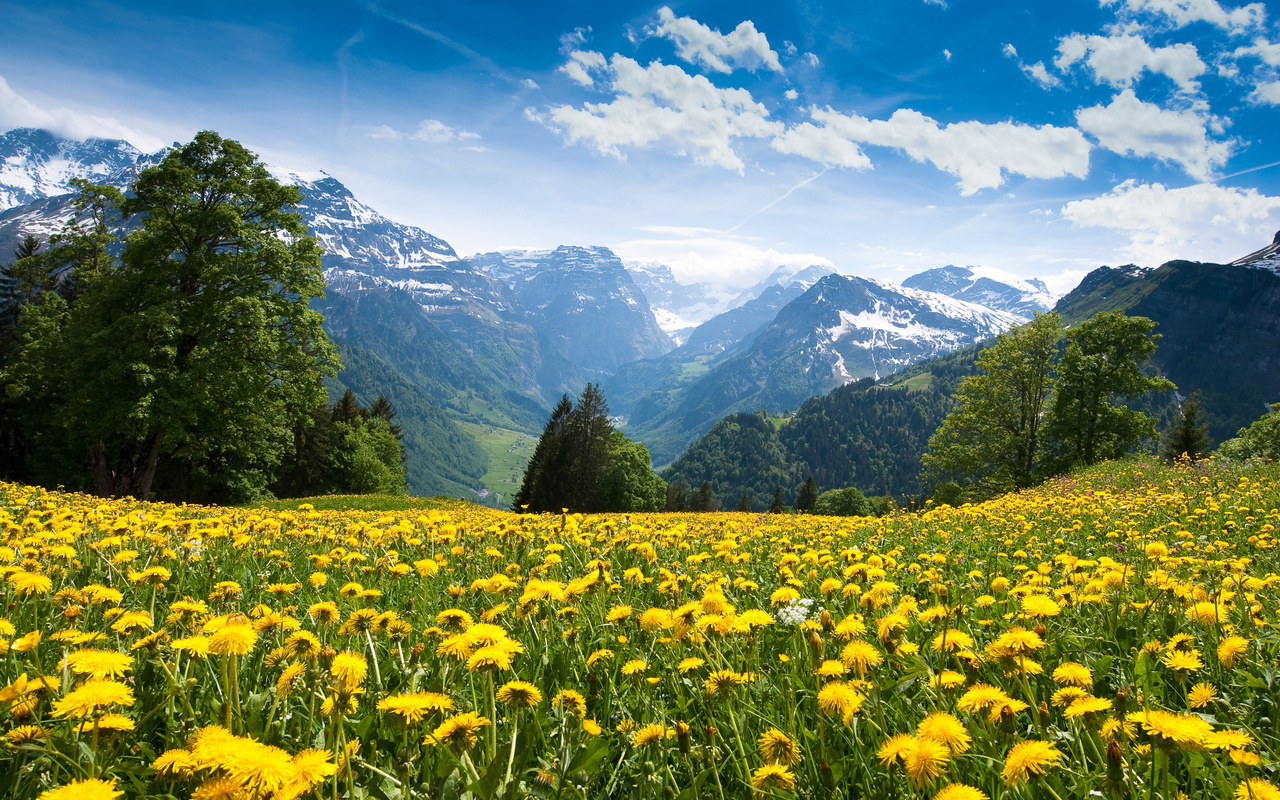Alps mountains sky dandelions