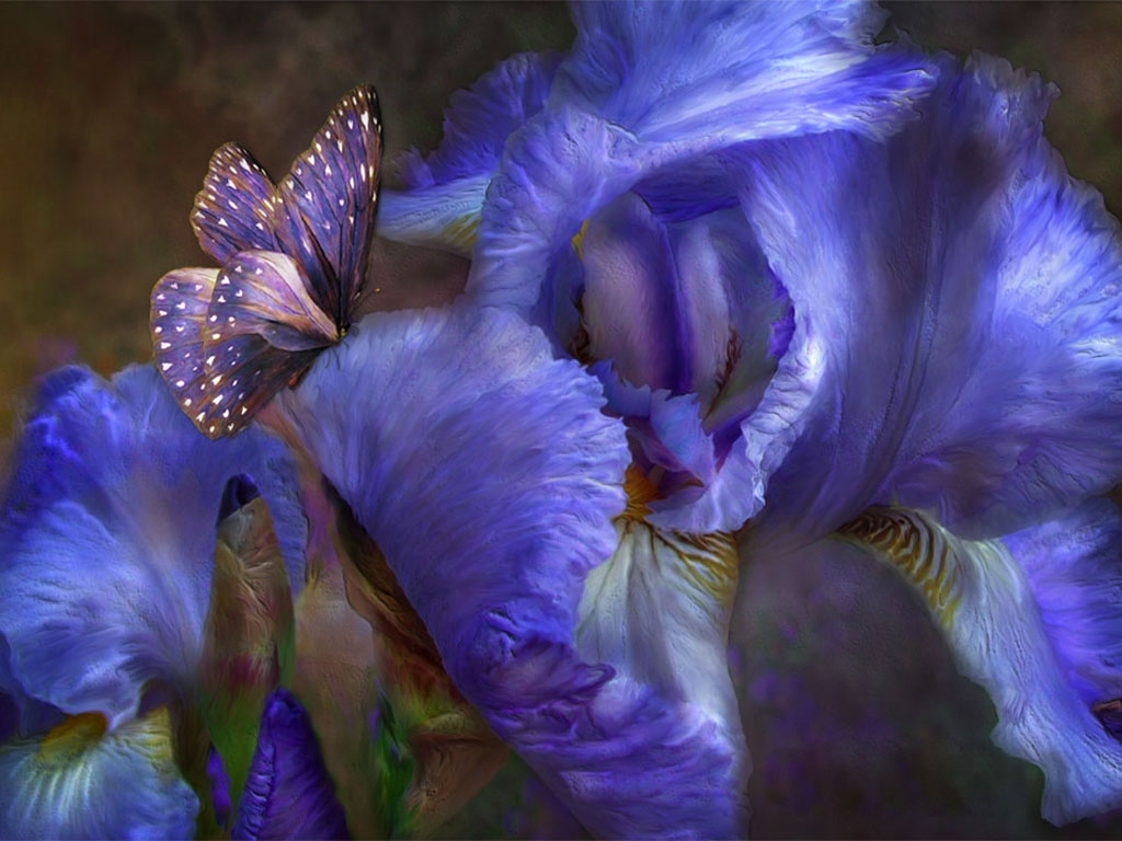 beautiful iris and butterfly