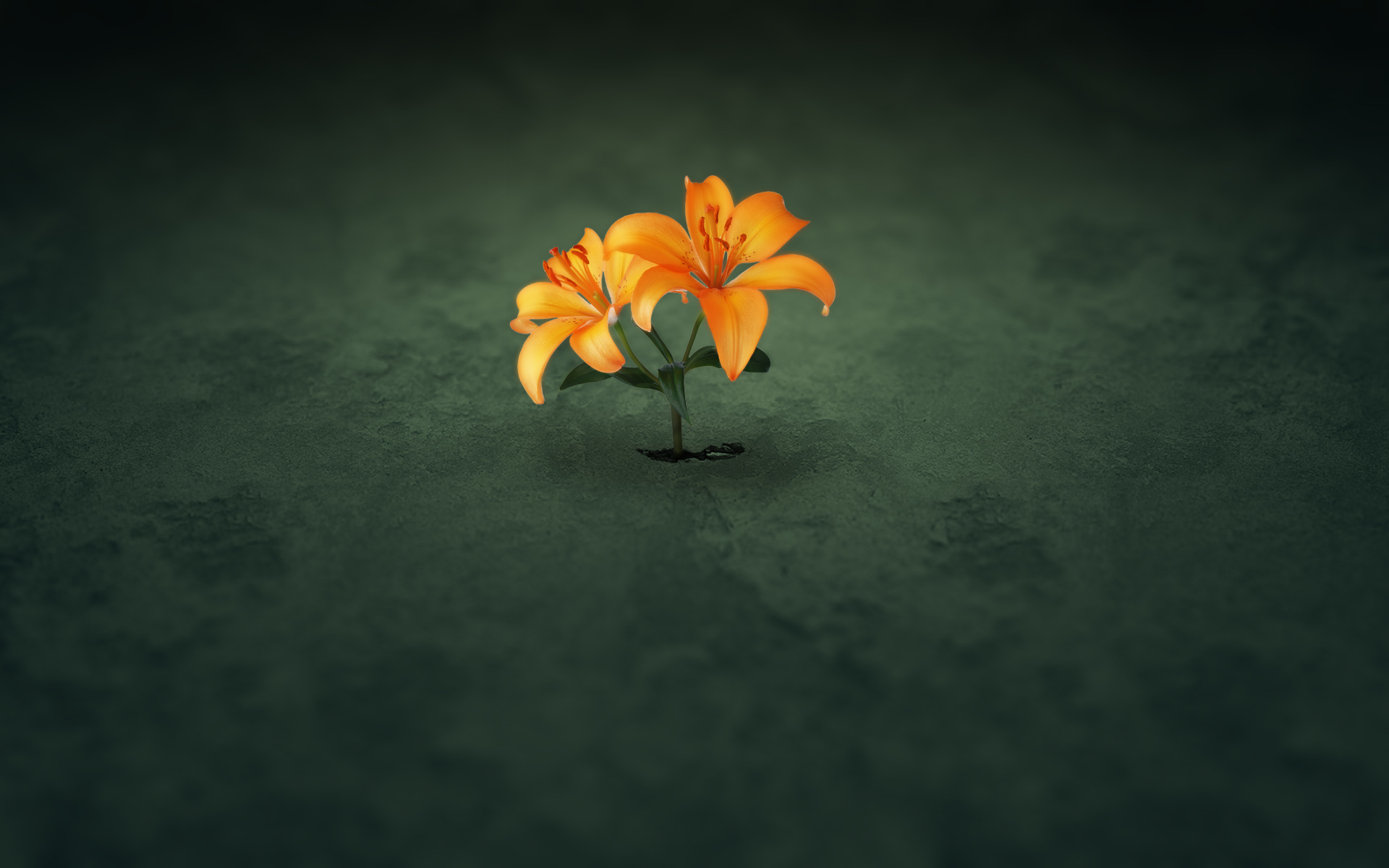 Bright flower on a dark ground, one of my favorite wallpapers