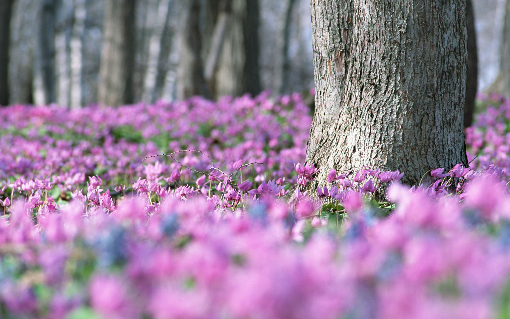 flowers in the forest