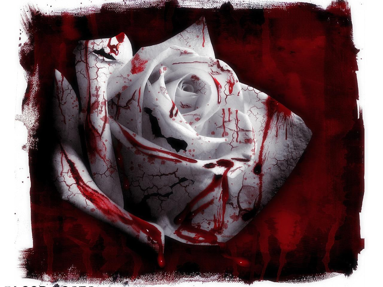 Rose covered with blood