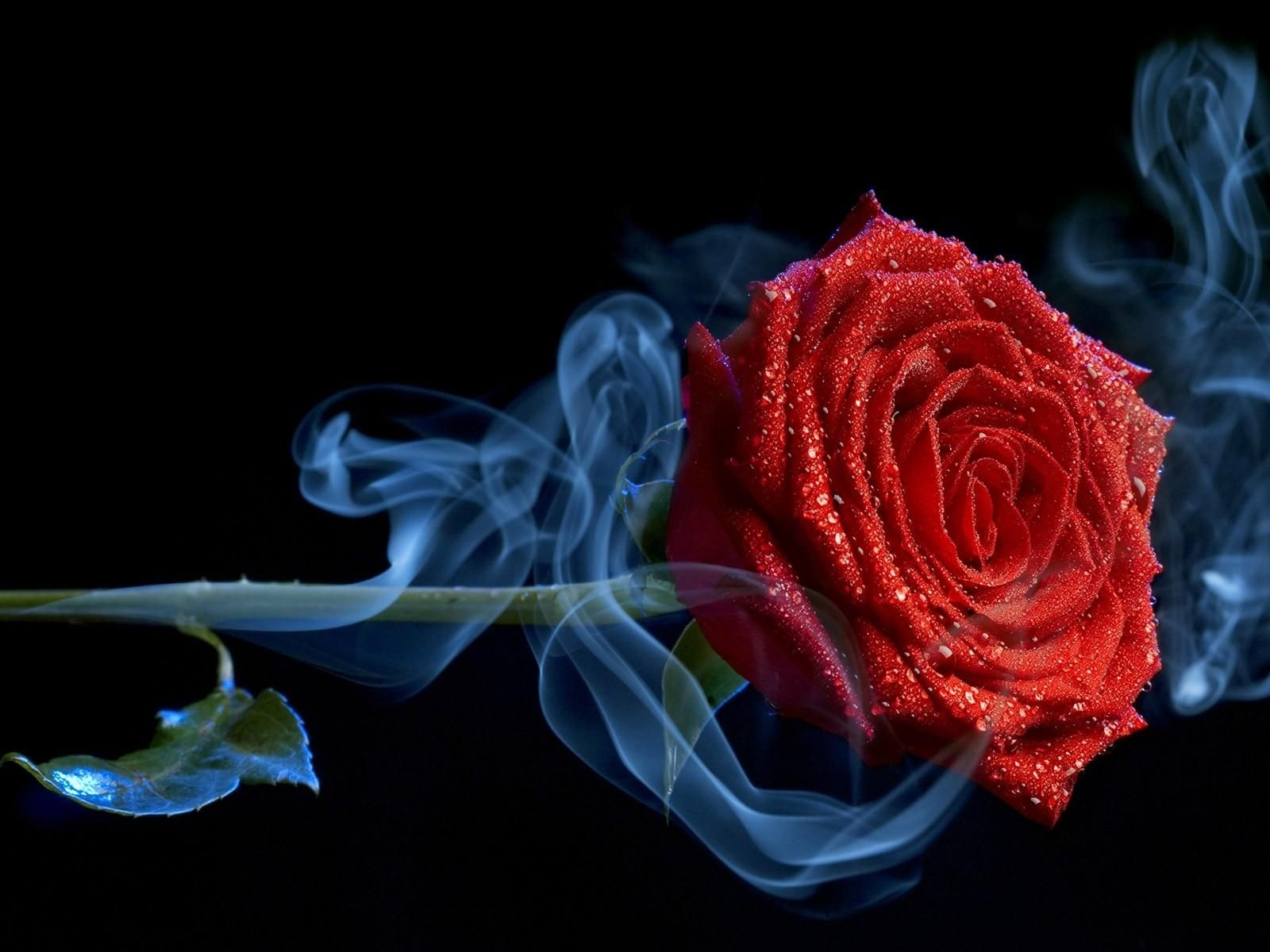 rose in a plume of smoke