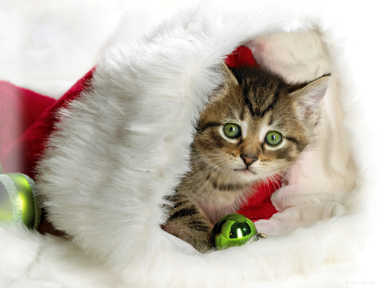 Christmas kitten in a Christmas red hat