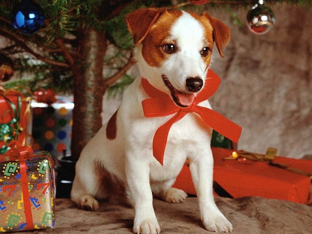 Puppy as a Christmas gift, Christmas wallpaper.