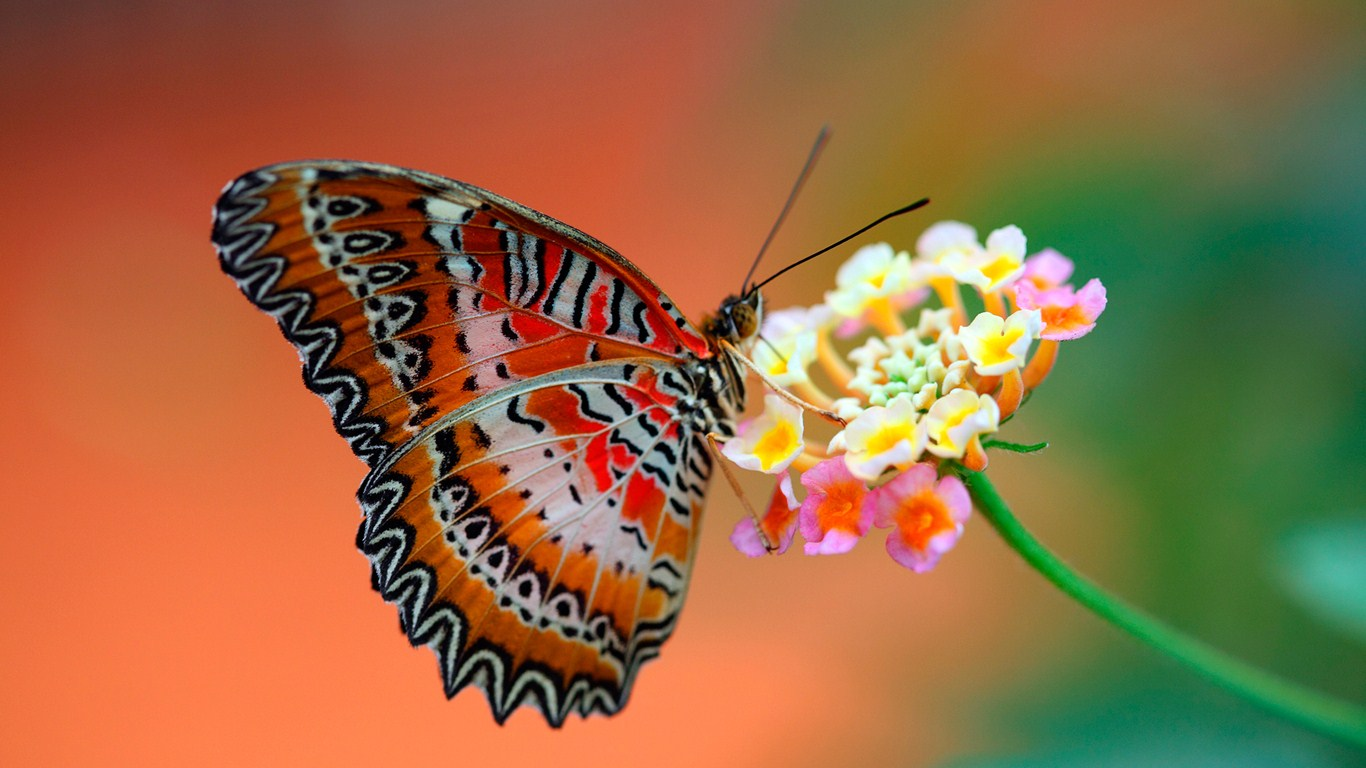 beautiful butterfly and flower