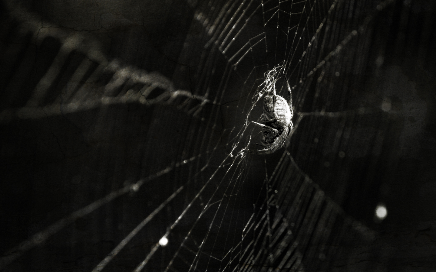 Black-and-white photo of a spider on a spider web