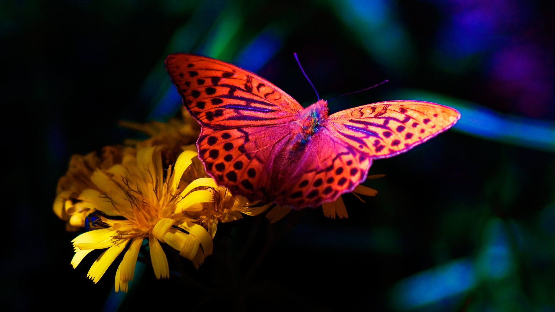 Flower and the butterfly
