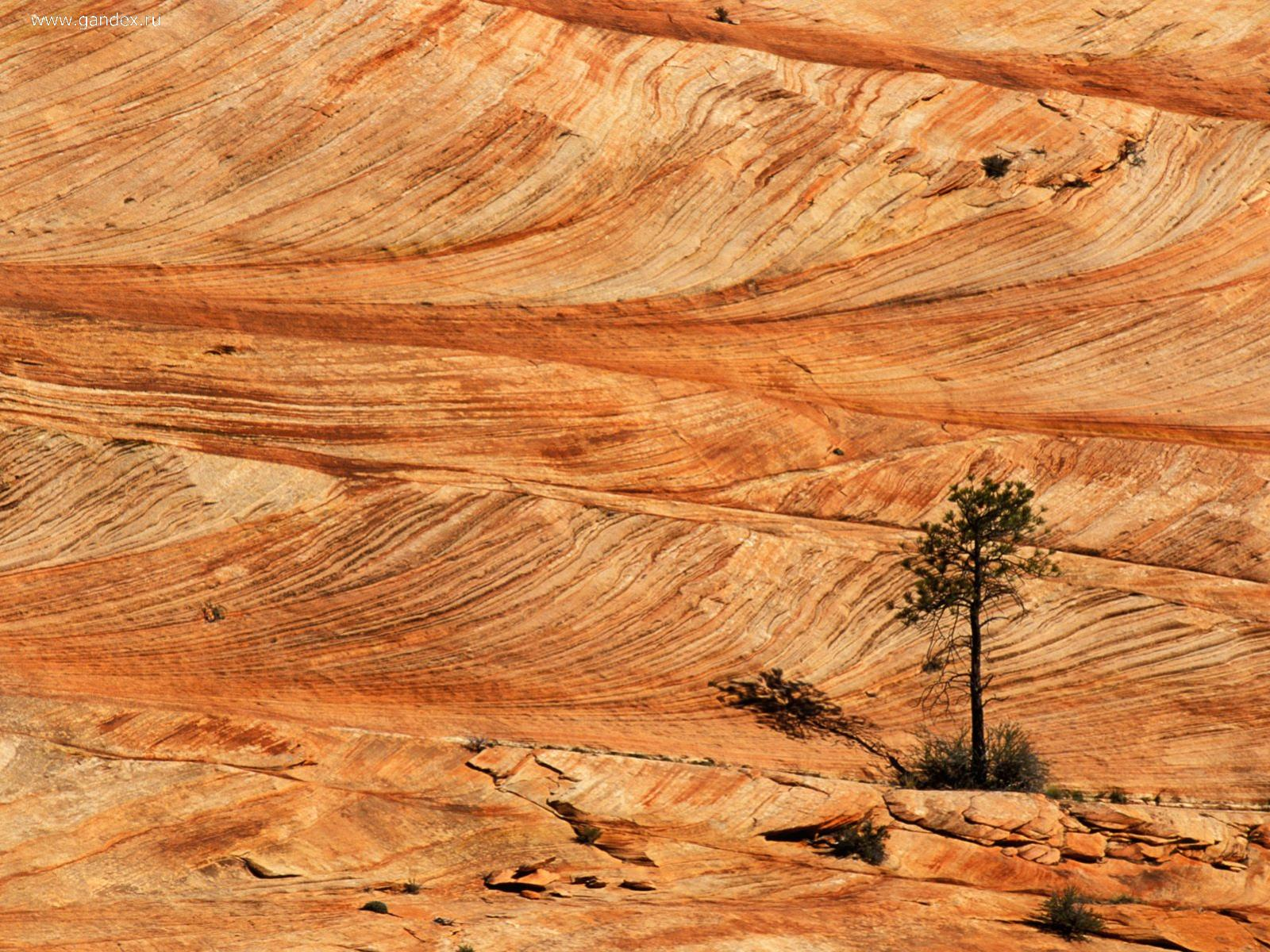A single tree on a rocky soil, Zion National Park in Utah, wallpaper.
