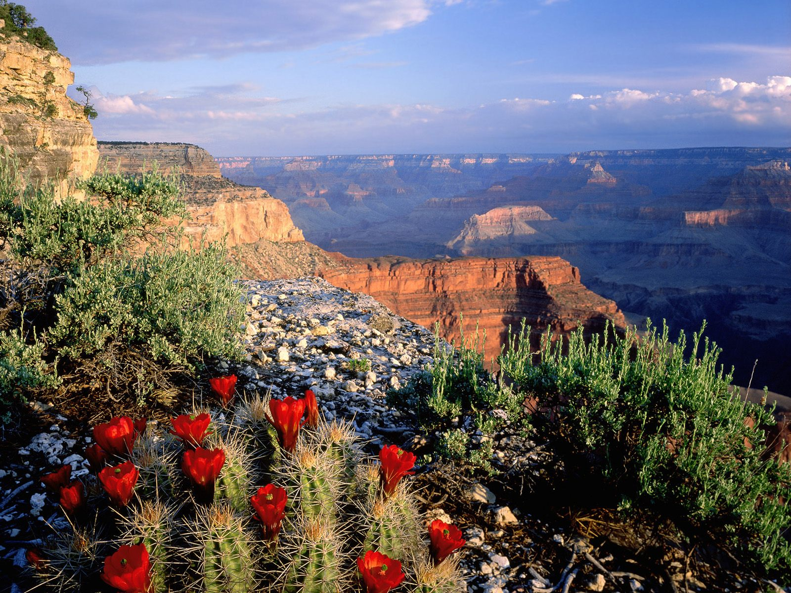 Flowers grow in the canyons