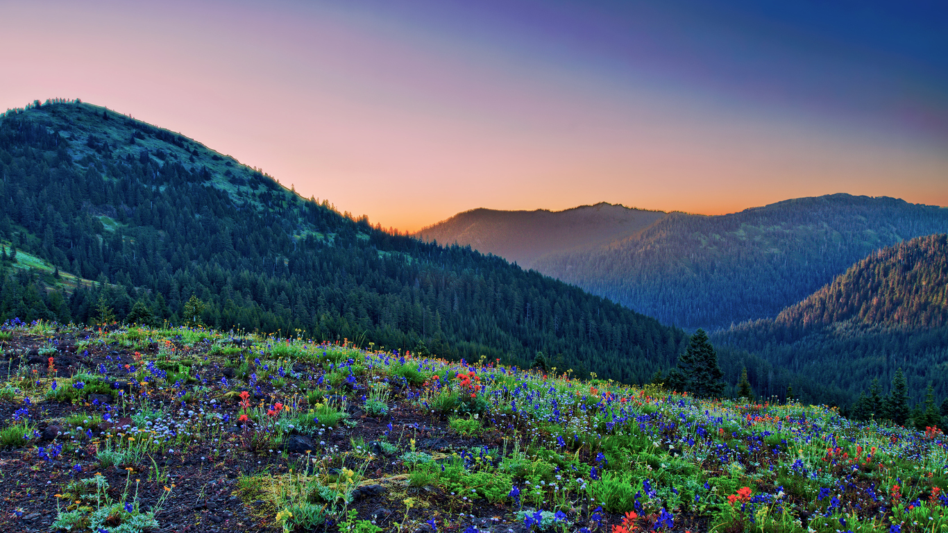 Mountain forest flowers