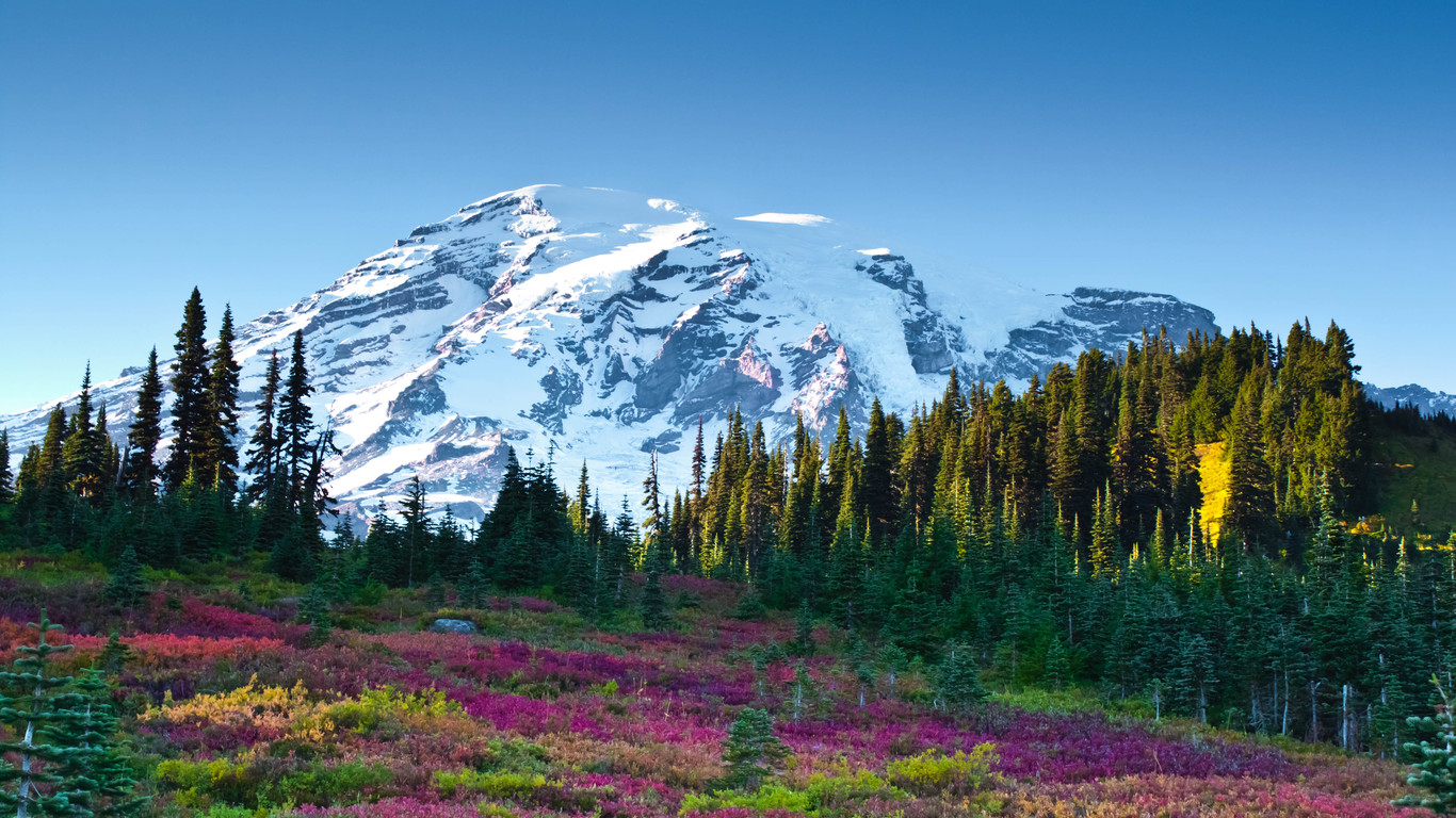 Mountain snow forest