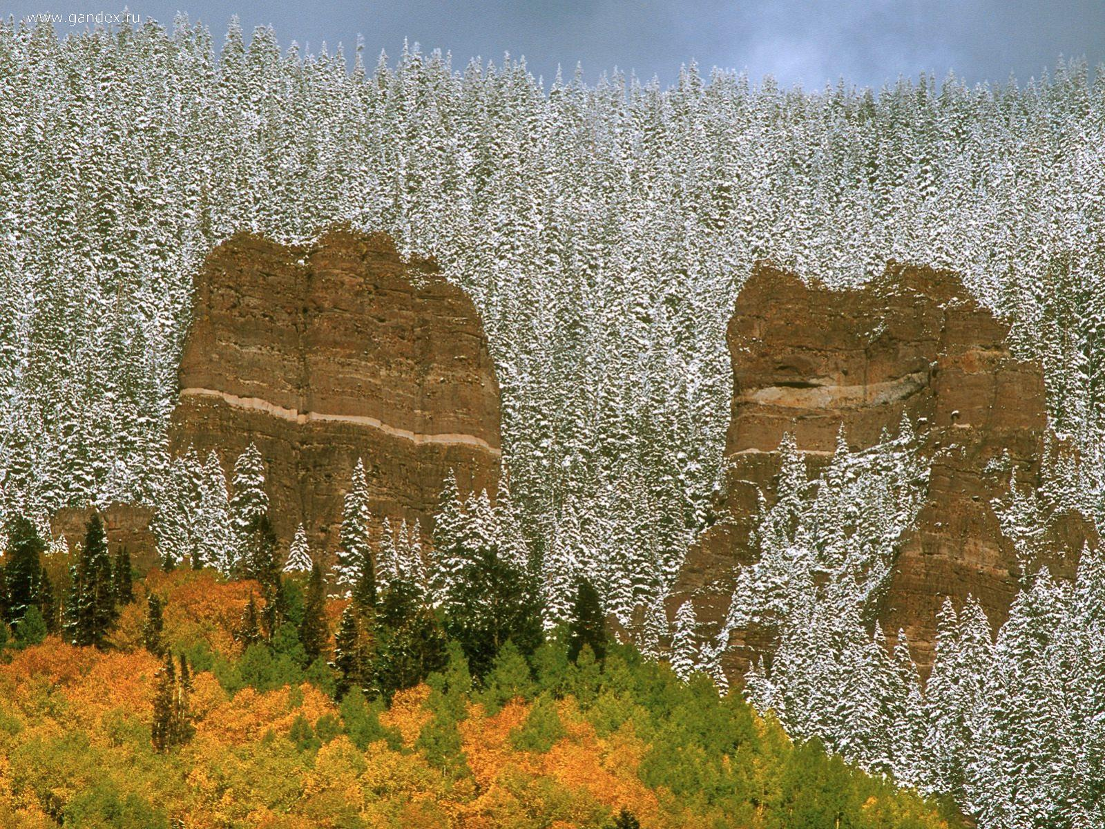 Trees covered with snow in Colorado, natural wallpaper.