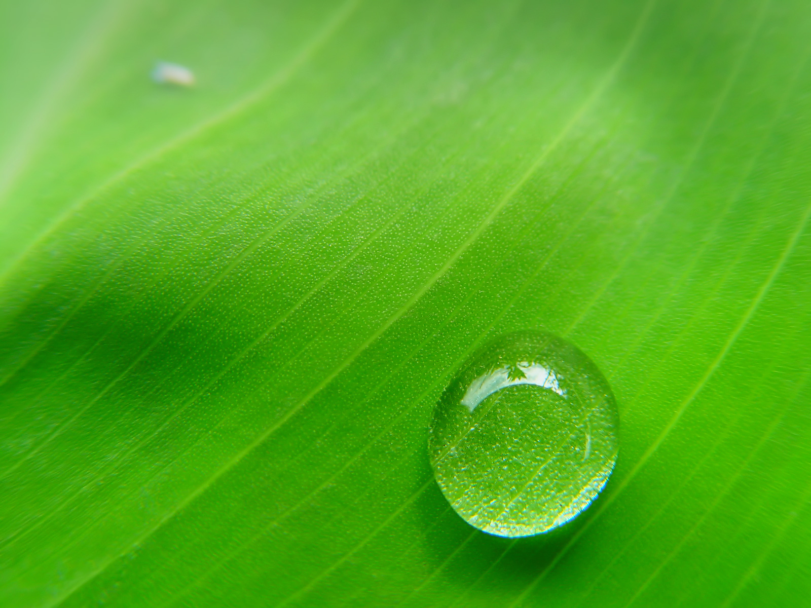 A drop on a green leaf - Wallpaper from category nature, a very beautiful and stylish image