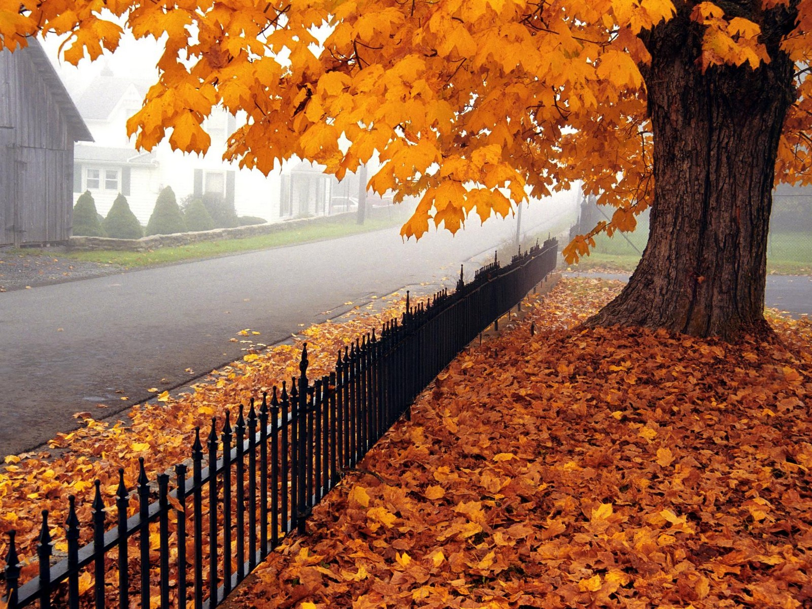 Autumn in the suburbs, wallpaper, wood, nature.
