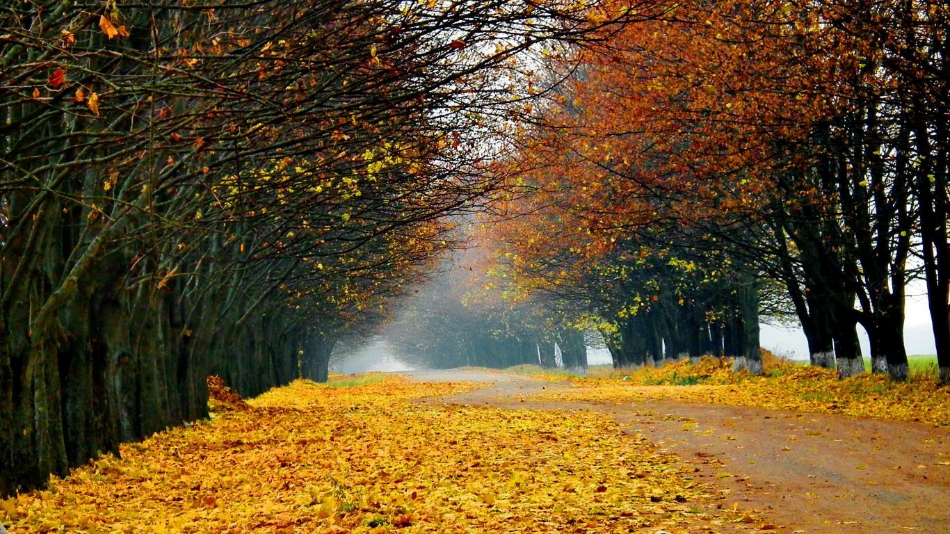 Autumn road trees