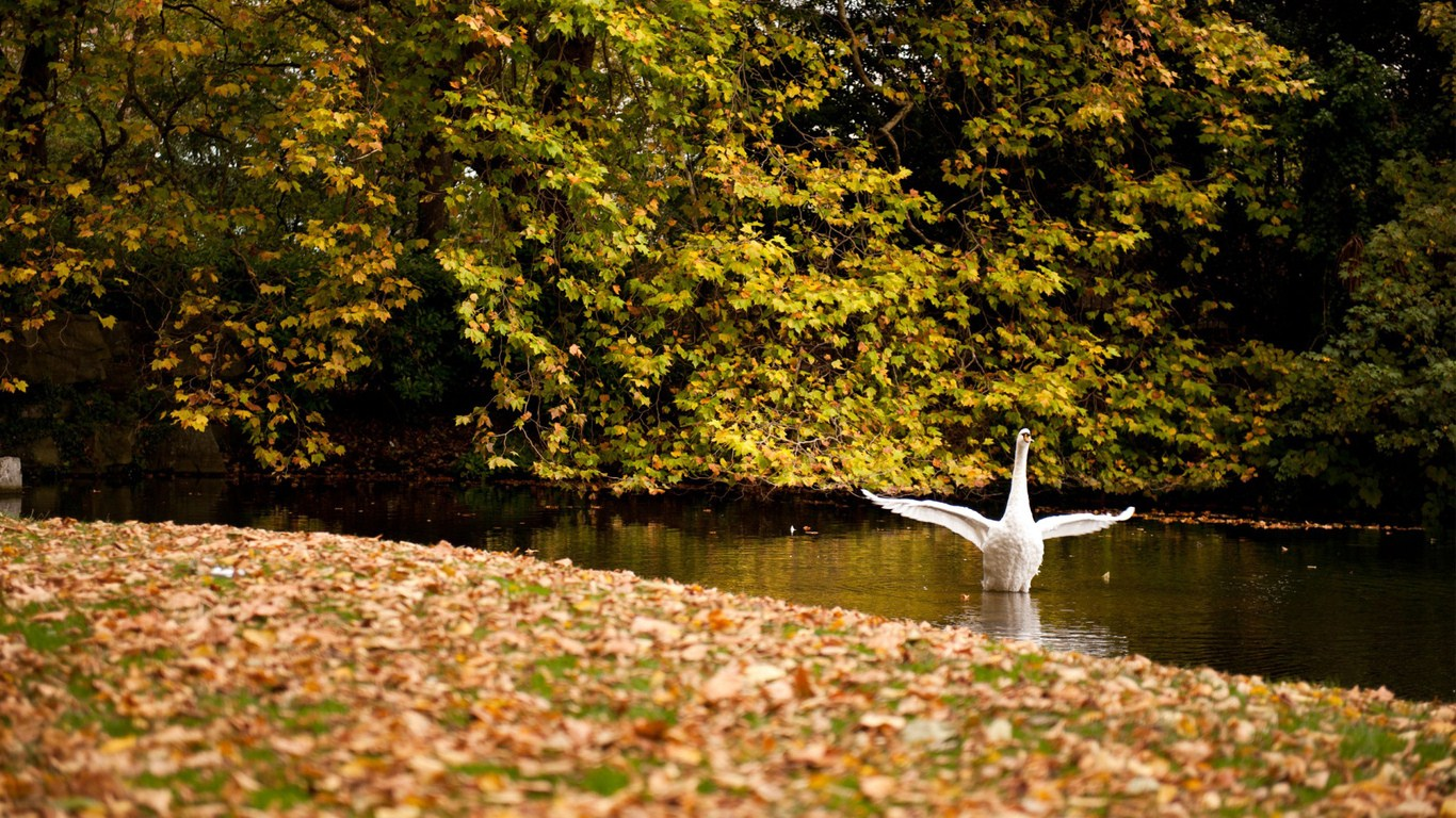 Autumn Swan Lake