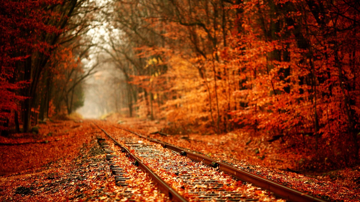 Autumn trees rails