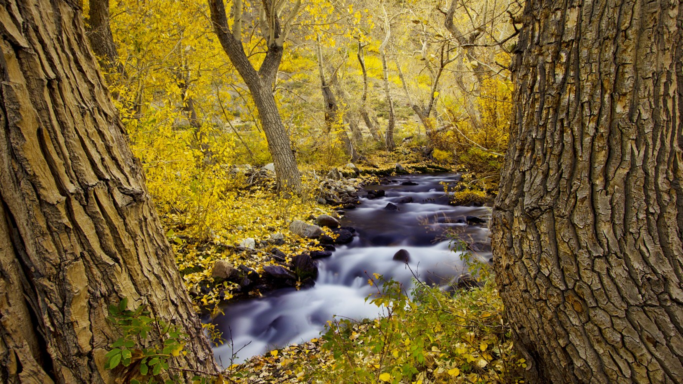 Forest creek fall