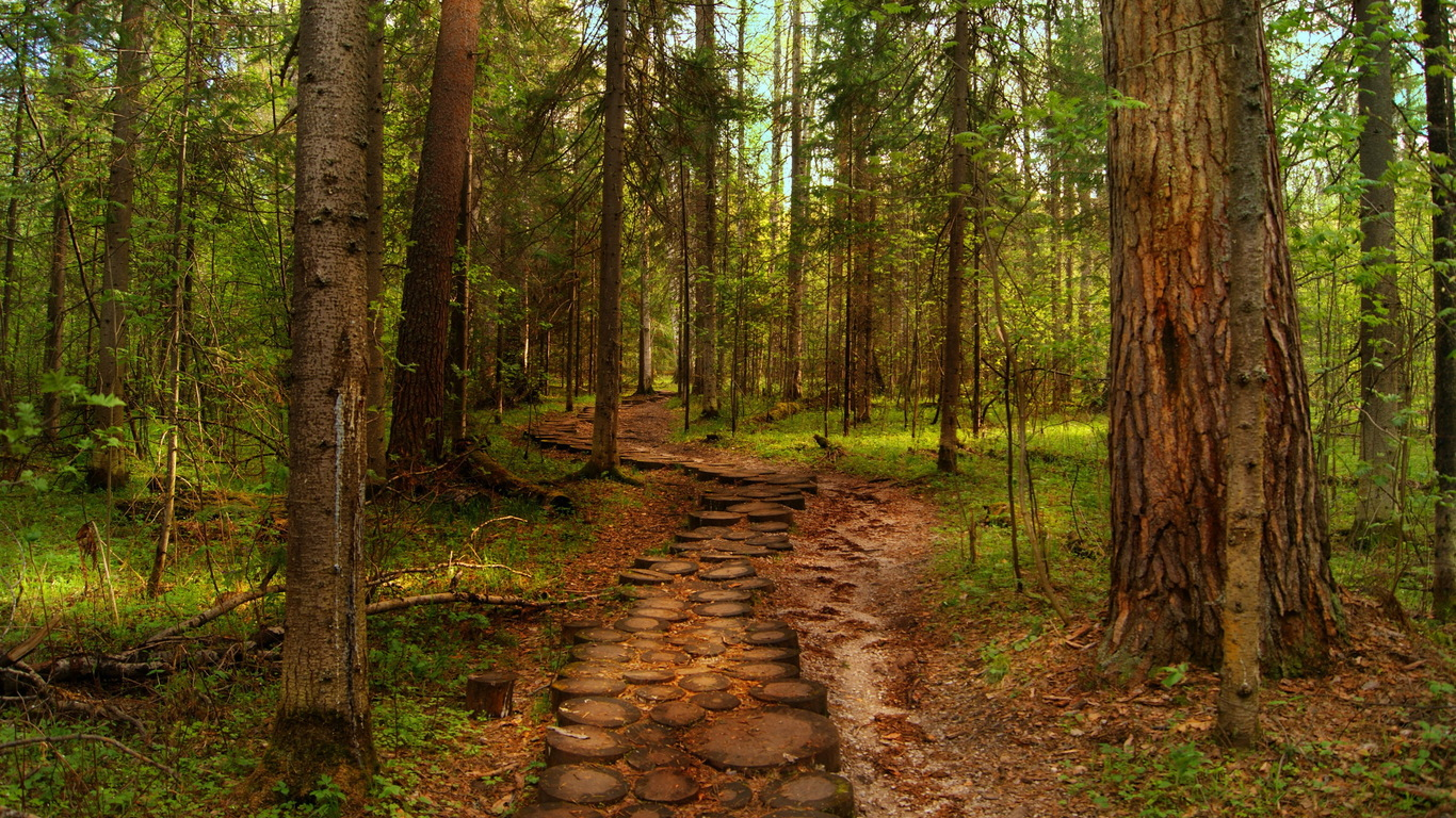 Forest trees path