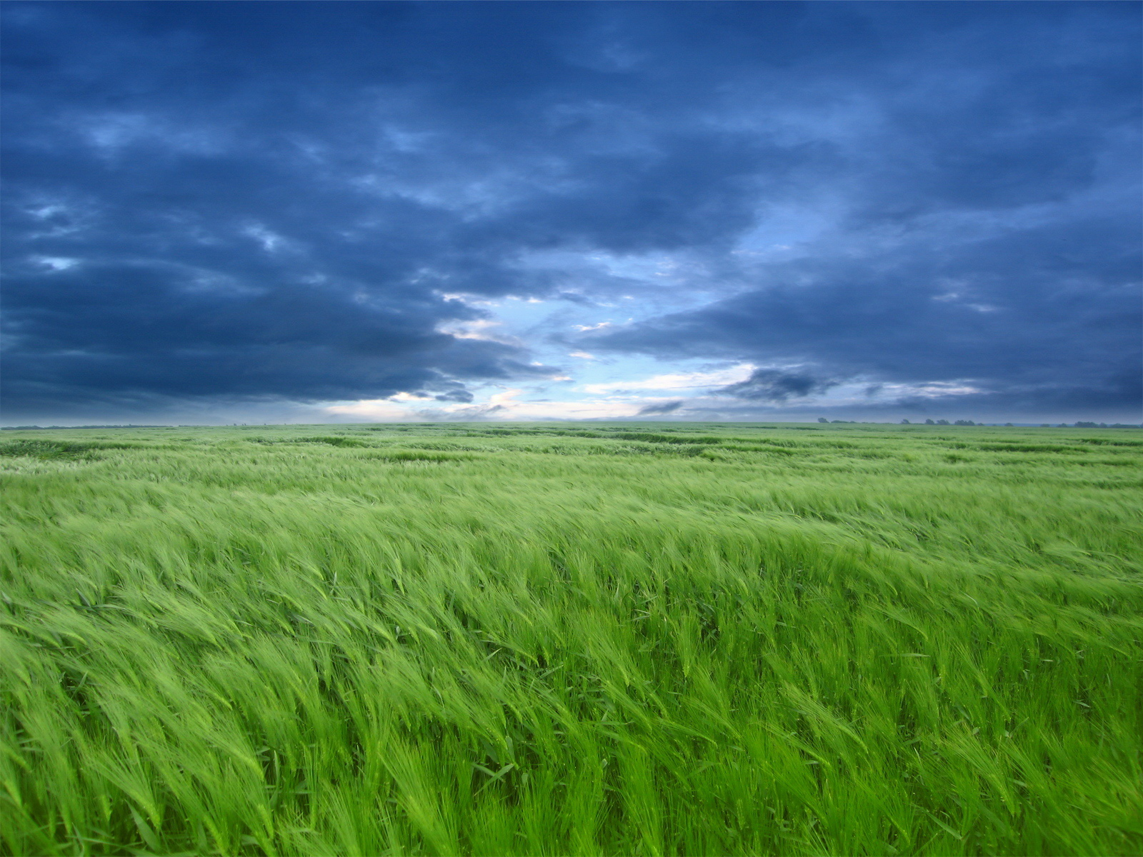 Green field - the waist grass