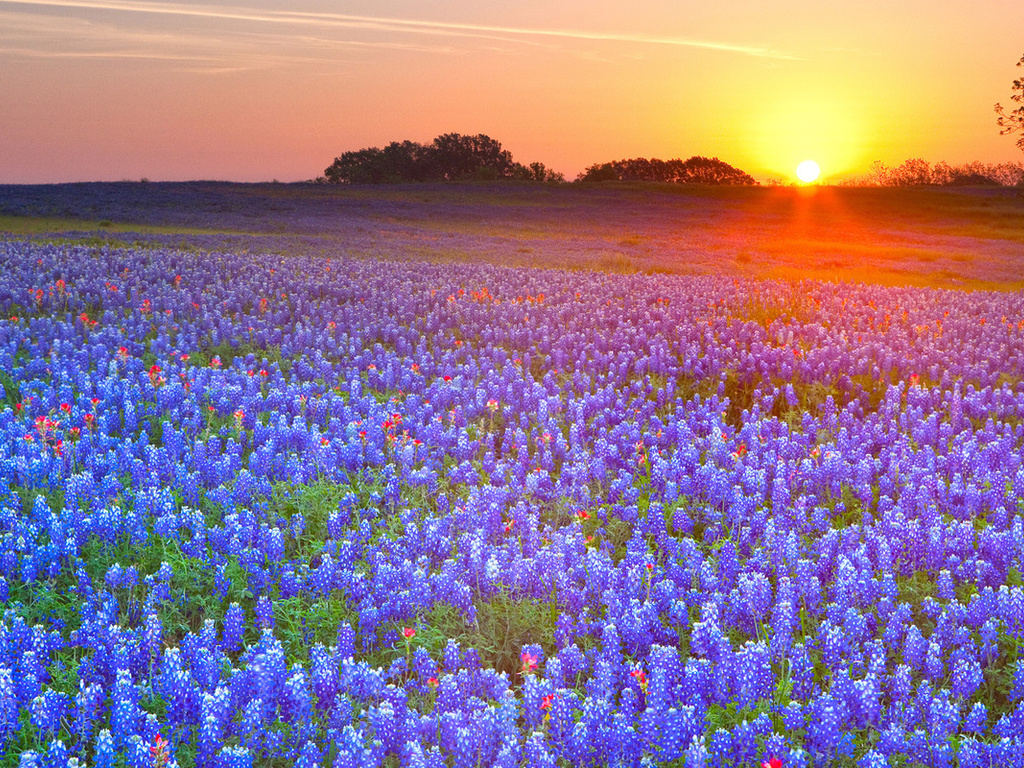 meadow, flowers, sunset