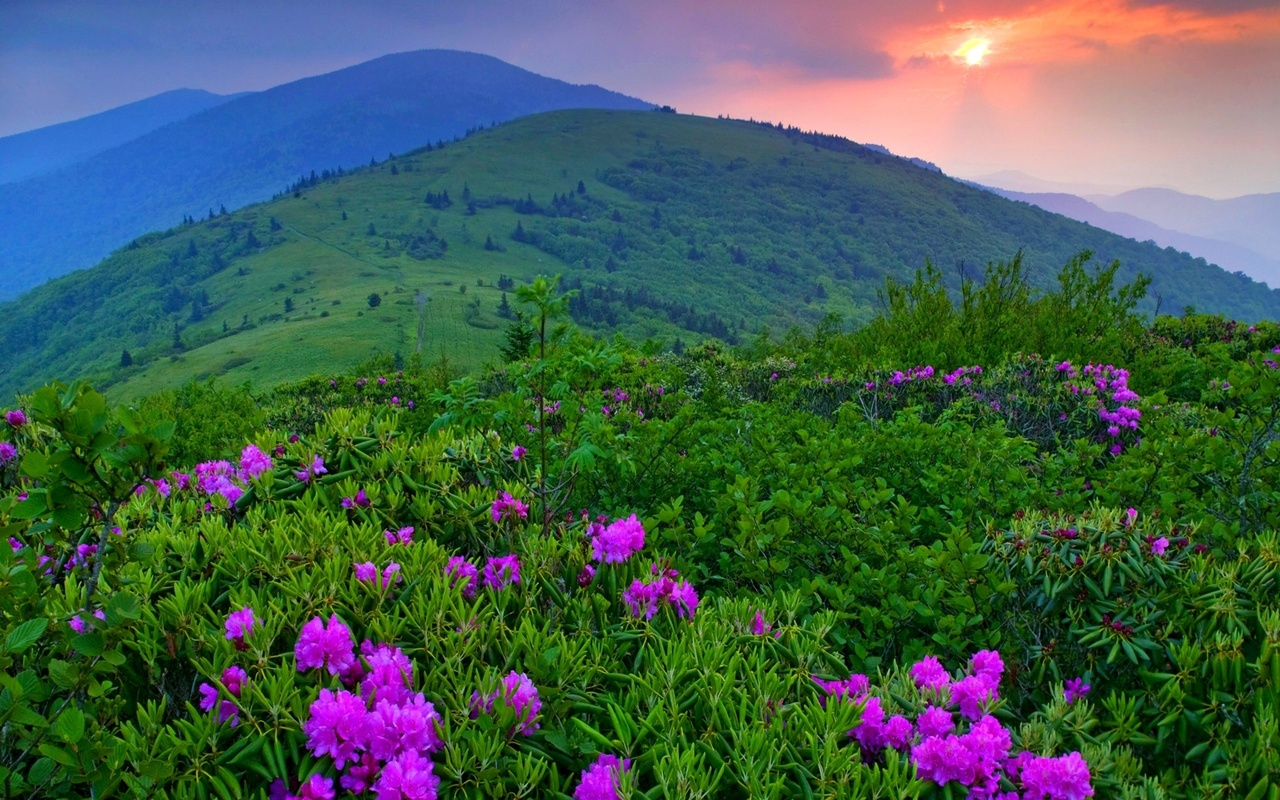 mountains, flowers